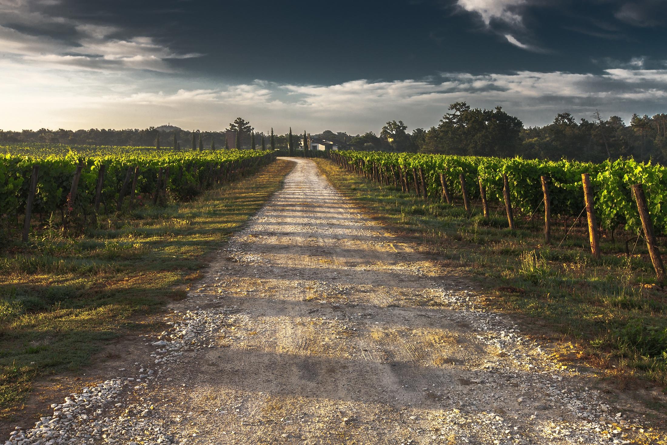 Forse... certi vini naturali costano un po' troppo?