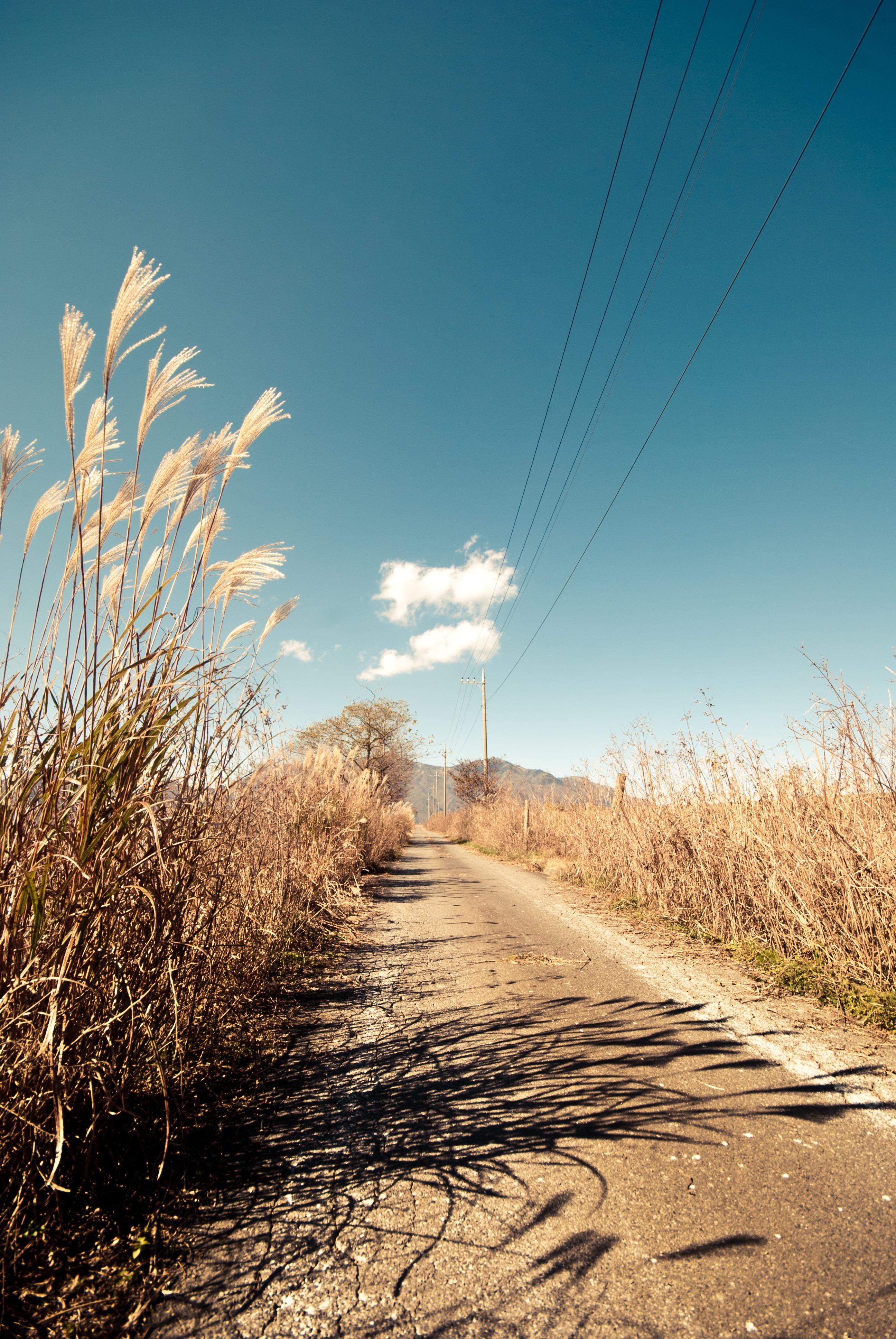 tall grass field sunset. Horizon, Mountain, Cloud, Plant, Sky, Sunset, Road, Field, Prairie, Sunlight, Morning, Hill, Wind, Direction, Journey, Soil, Blue, Tall Grass, Outdoors, Grass Field Sunset Y