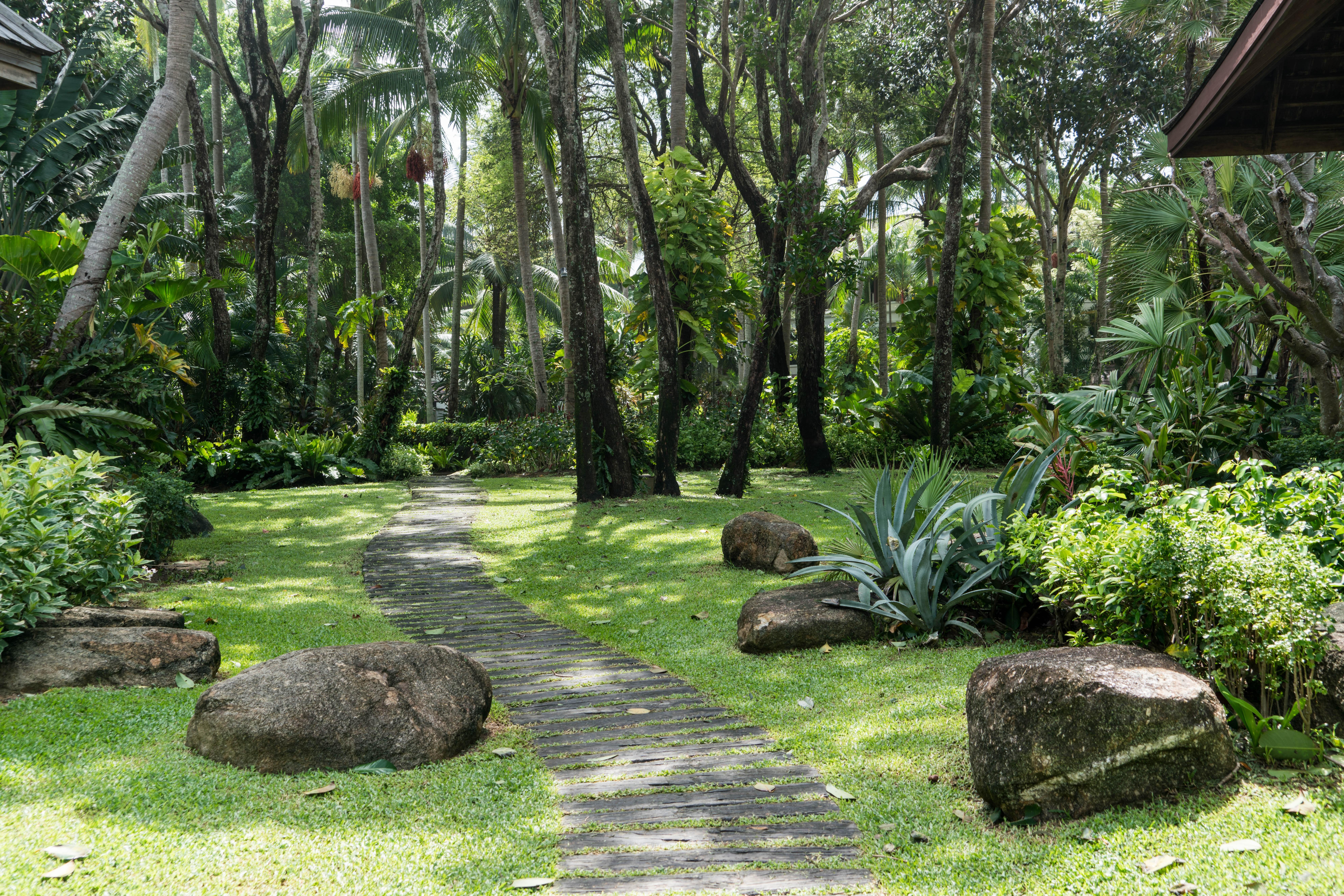 Fotos gratis paisaje rbol naturaleza camino c sped for Hotel jardin botanico