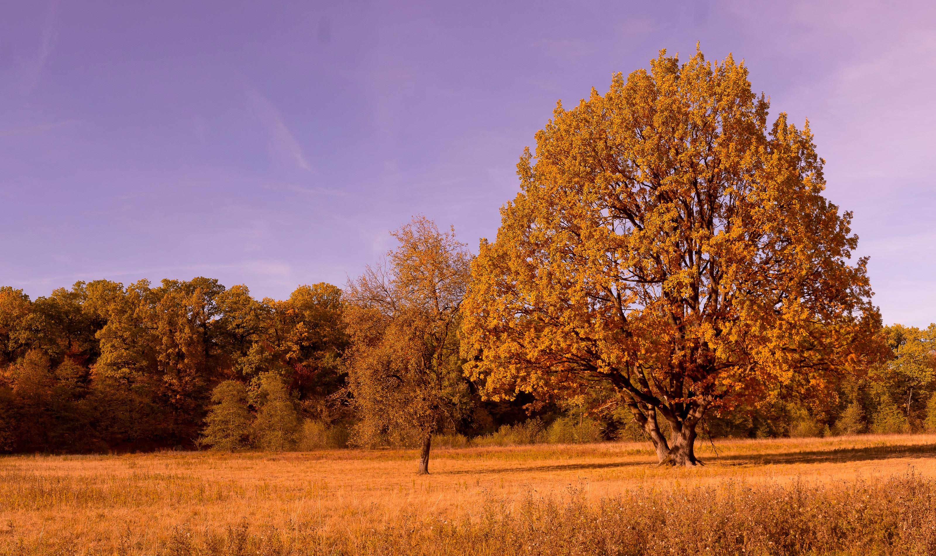 free images landscape nature field meadow prairie sunlight