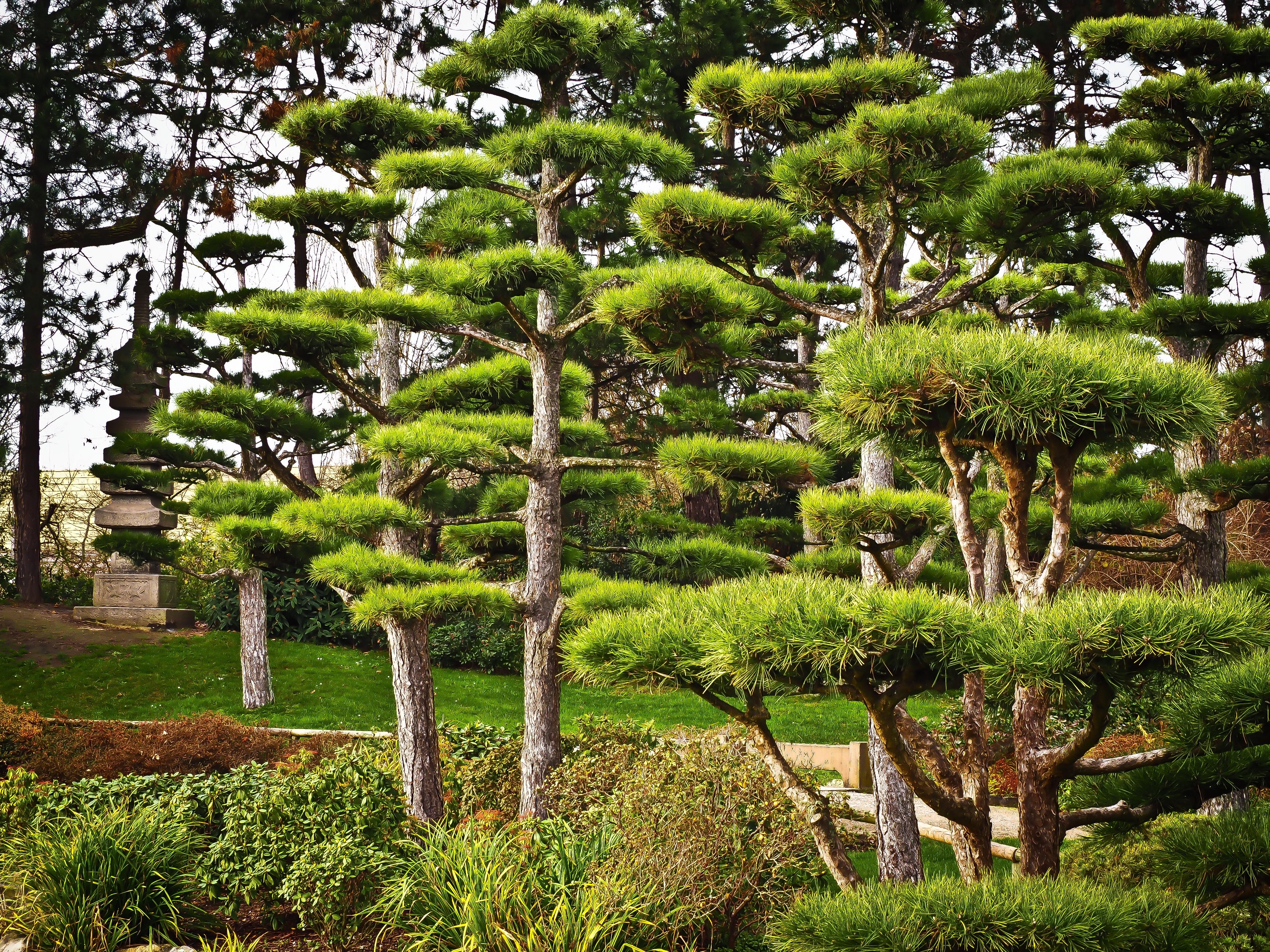 free images landscape tree nature flower evergreen park