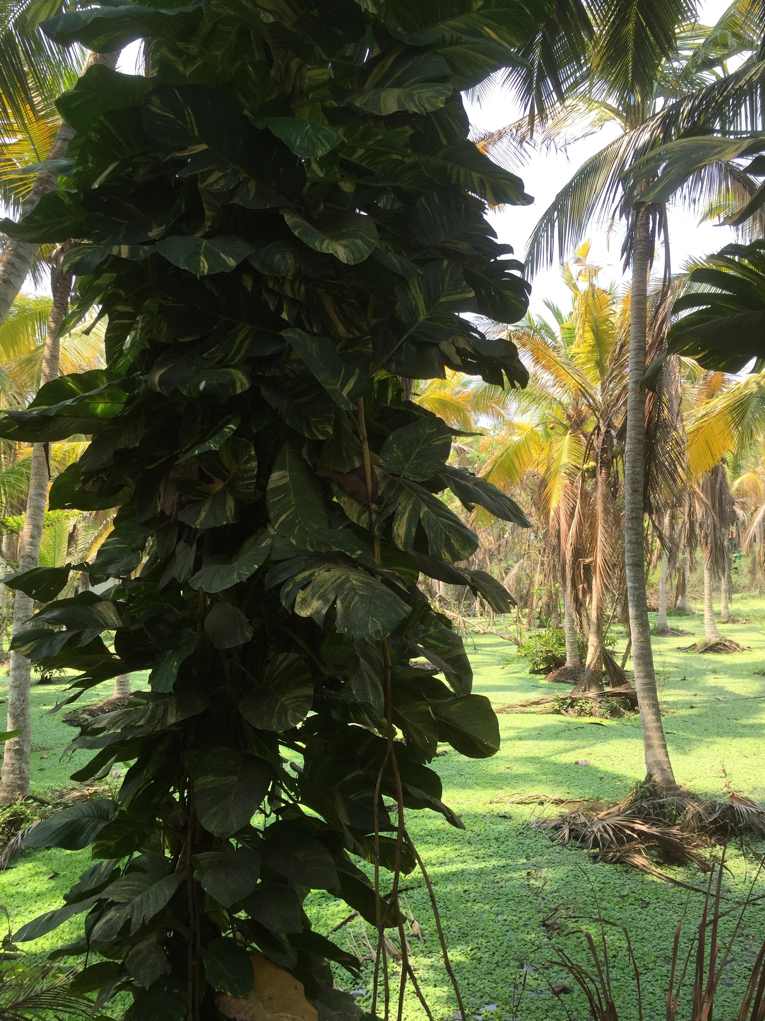 free images landscape tree nature fruit leaf flower food