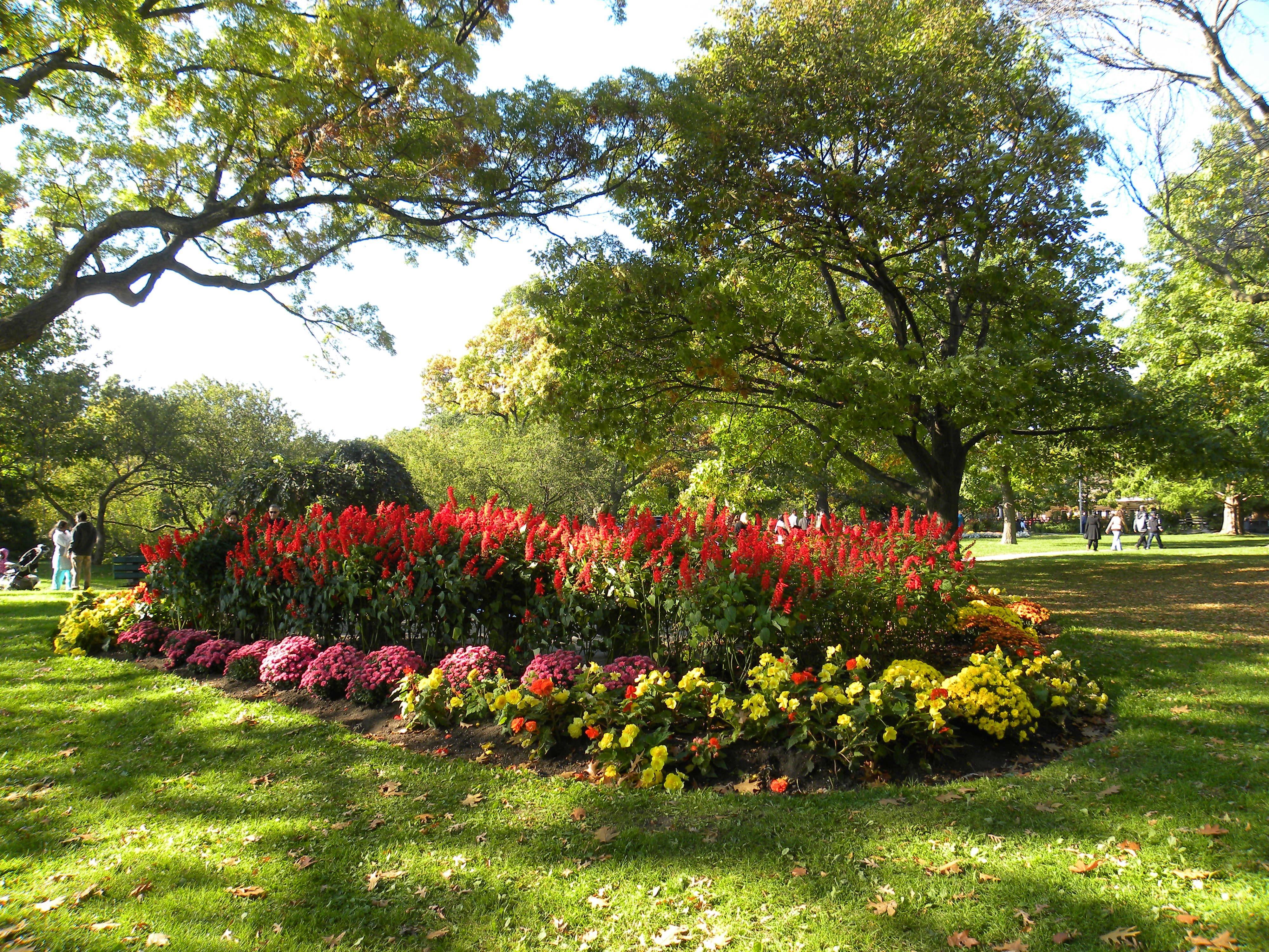 Fotos gratis paisaje rbol naturaleza c sped flor for Arboles y arbustos para jardin
