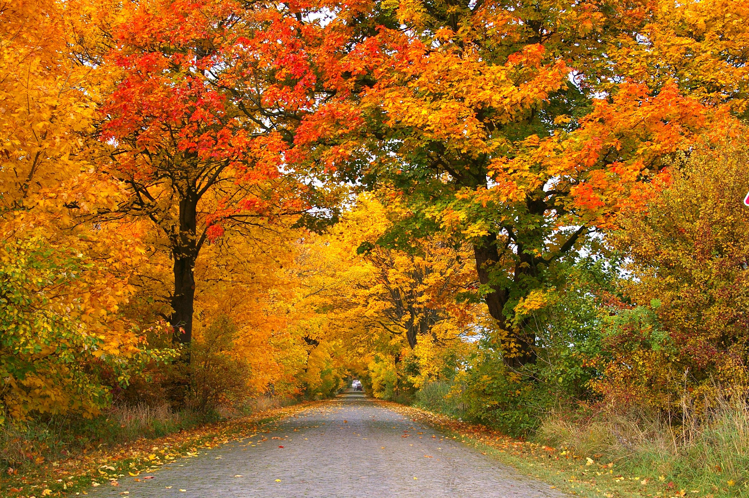 Fotoğraf Peyzaj Doğa Yol Tünel Asfalt Kuru Yeşillik Altın