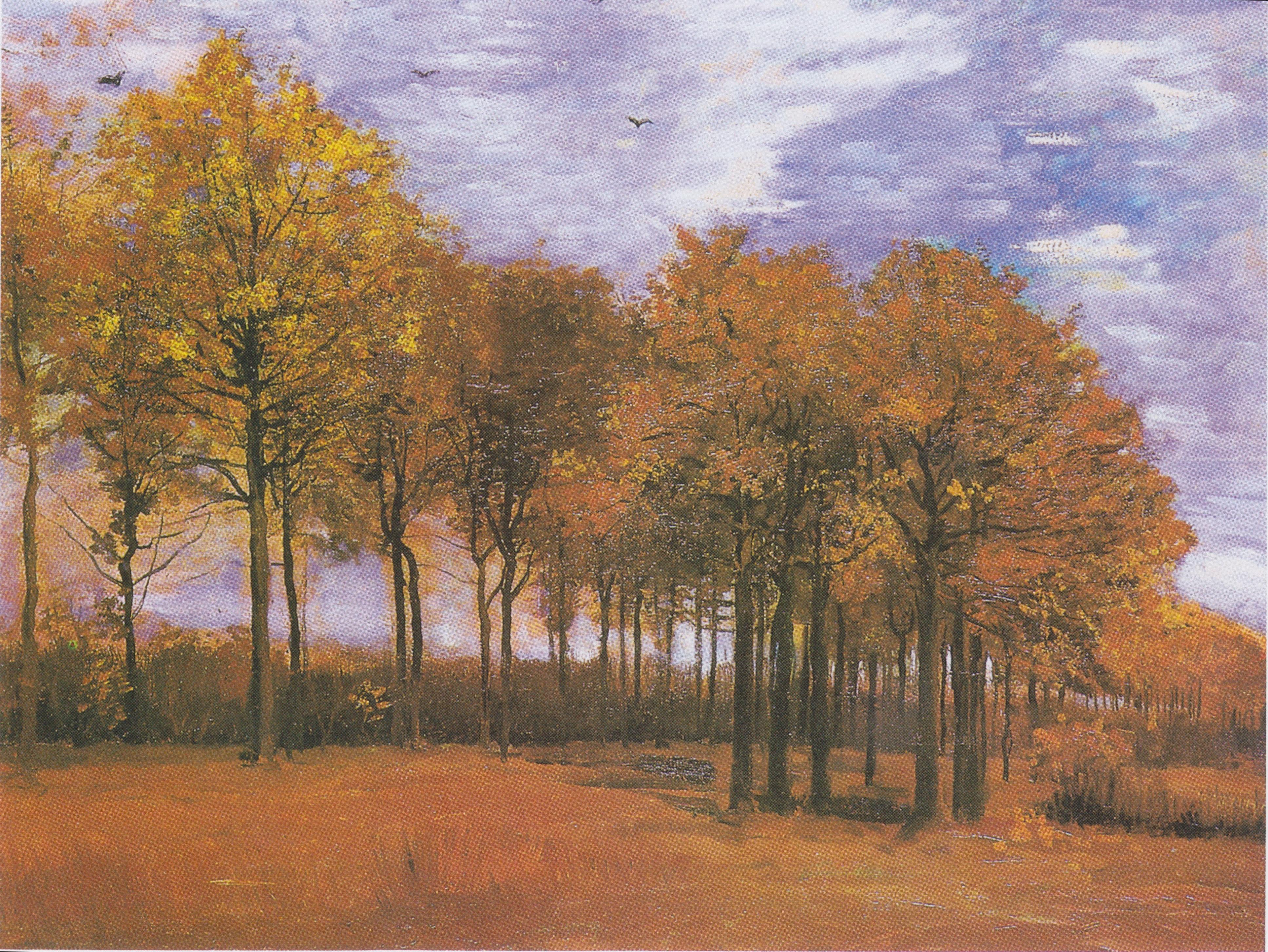 images gratuites   paysage  arbre  la nature  plante  ciel  champ  prairie  campagne  matin
