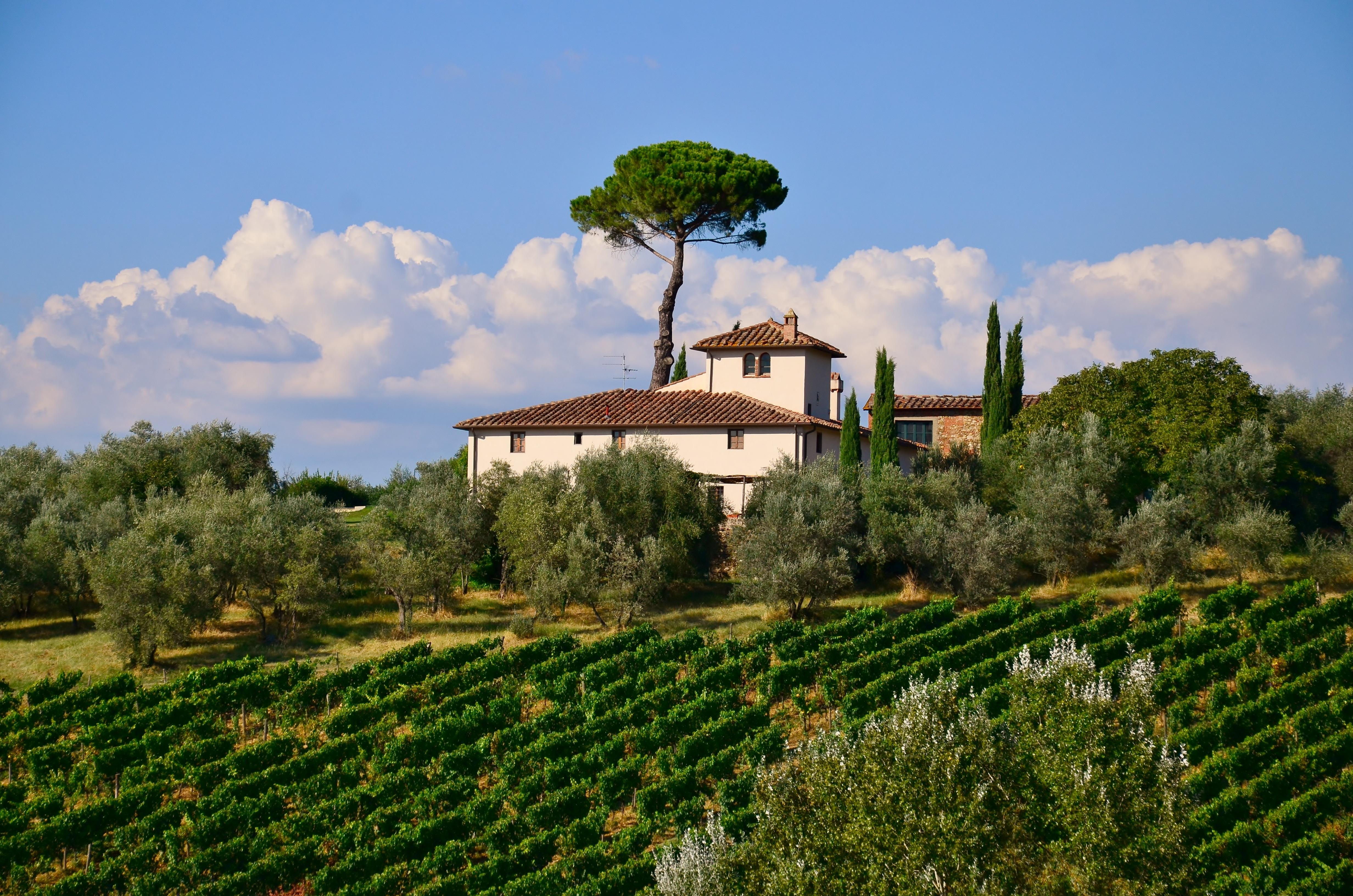 Дома с виноградниками фото