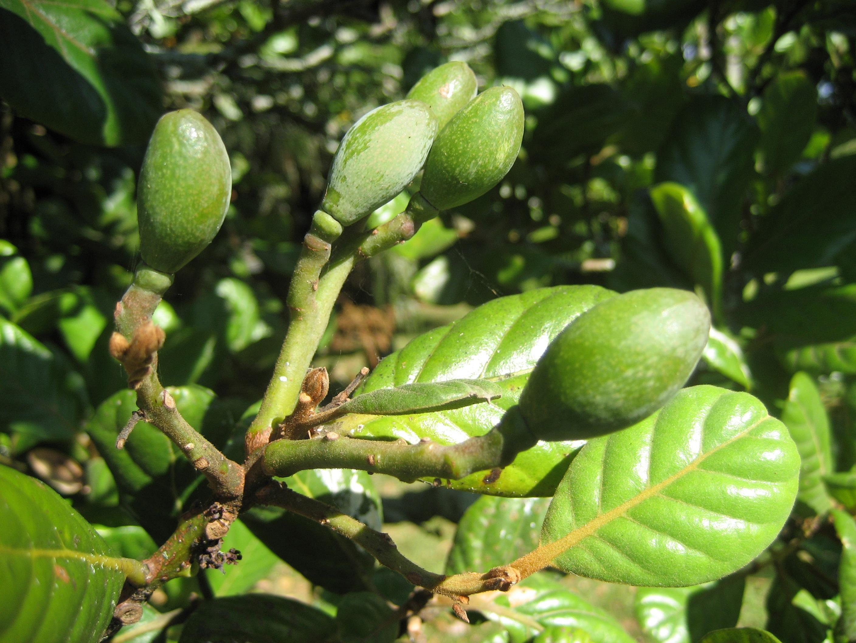 Fotos gratis paisaje rbol naturaleza sol fruta for Arboles para veredas hojas perennes