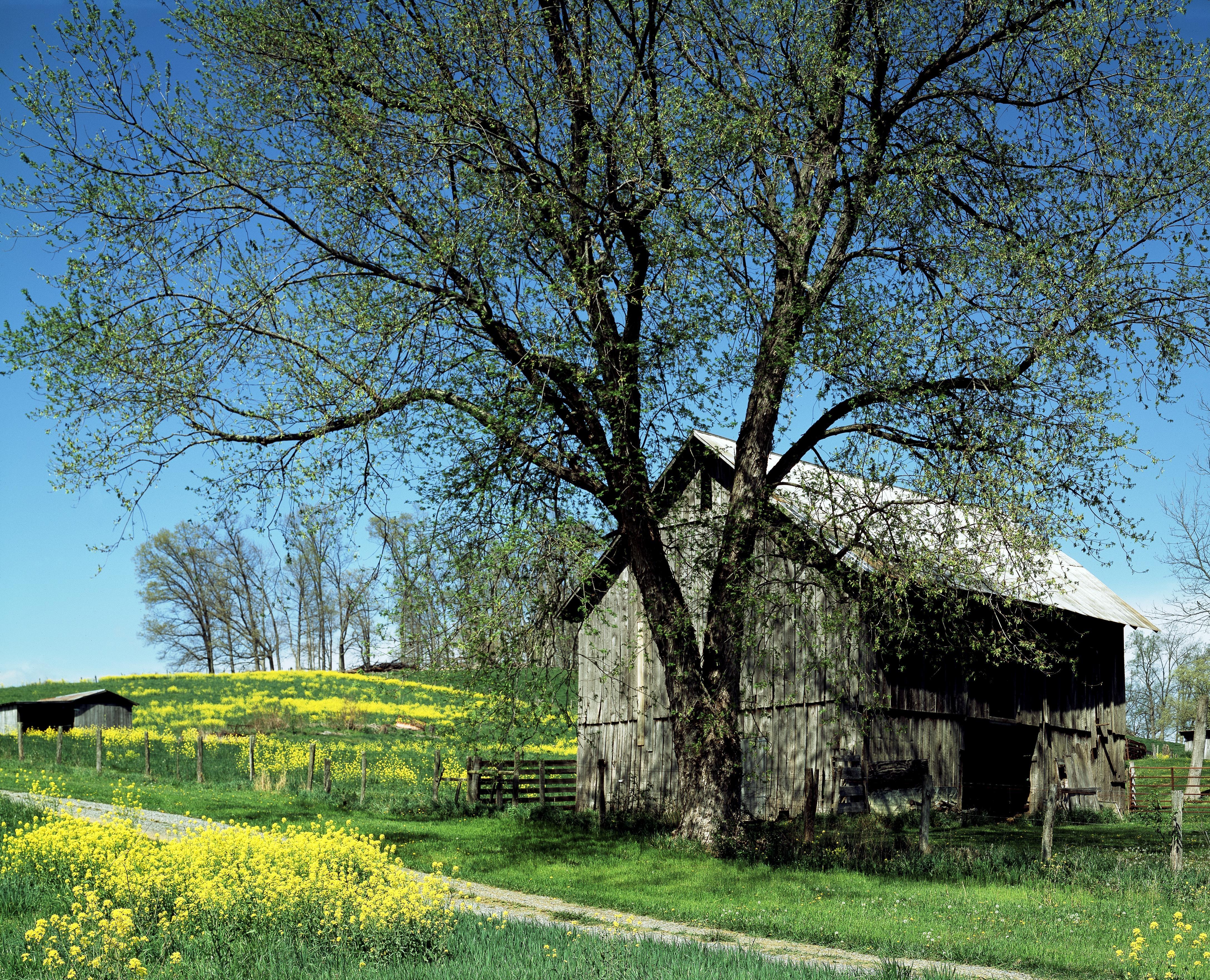 Kostenlose foto : Landschaft, Baum, Natur, Holz, Bauernhof, Wiese ...