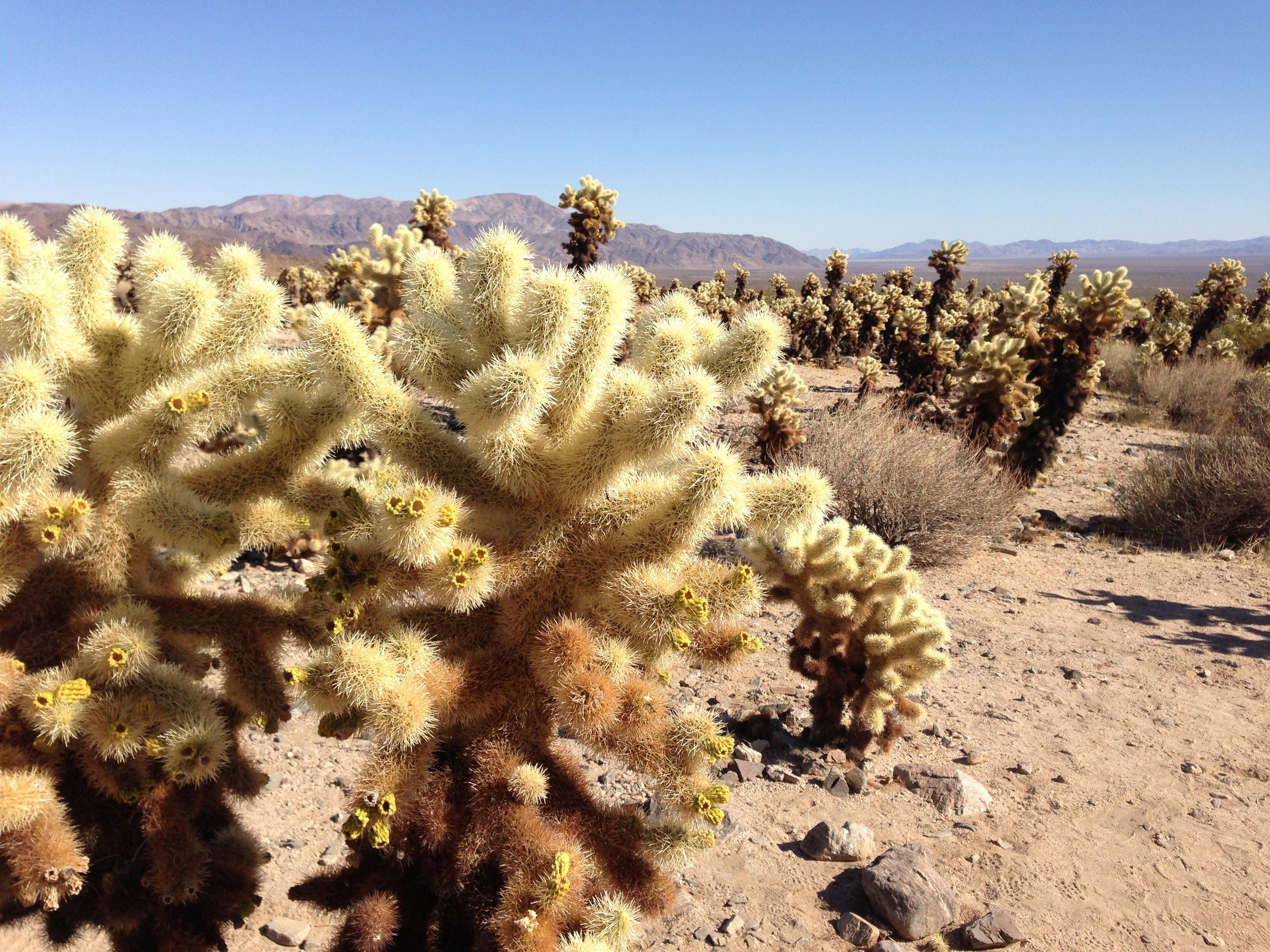 Fotos gratis paisaje rbol naturaleza arena cactus planta