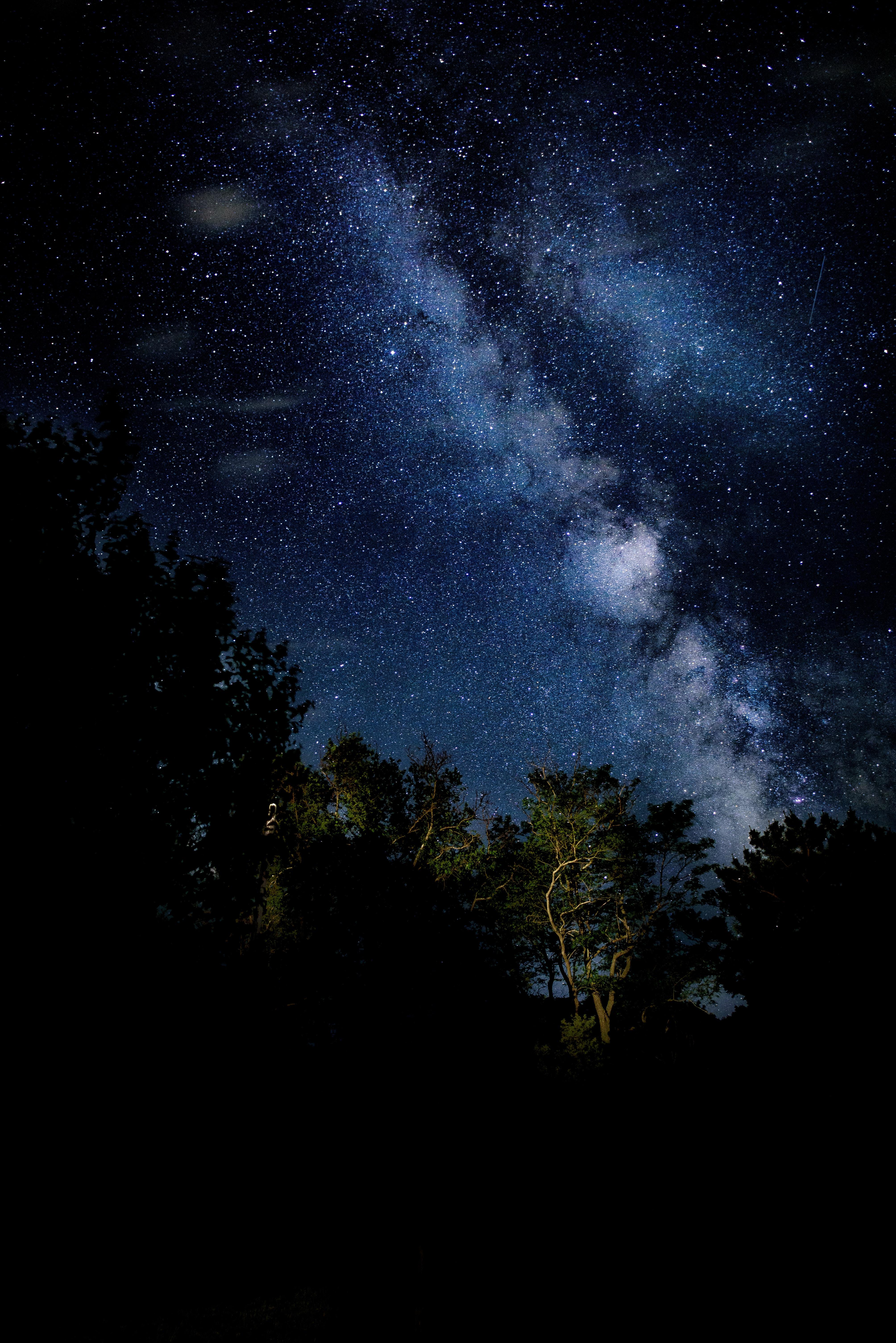 Gambar Pemandangan Pohon Langit Bintang Bima Sakti Suasana
