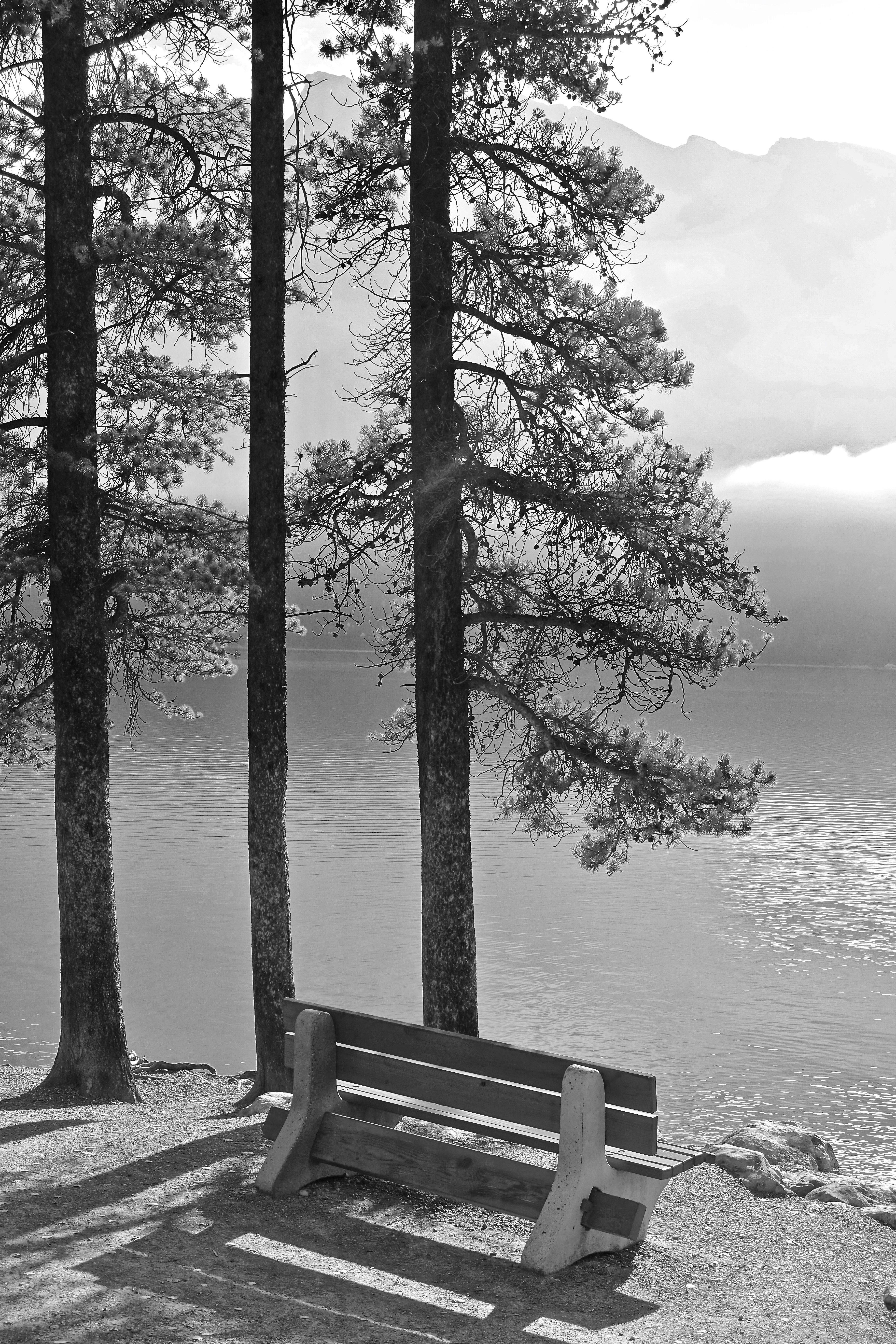 Fotos Gratis Paisaje árbol Naturaleza Nieve Invierno En