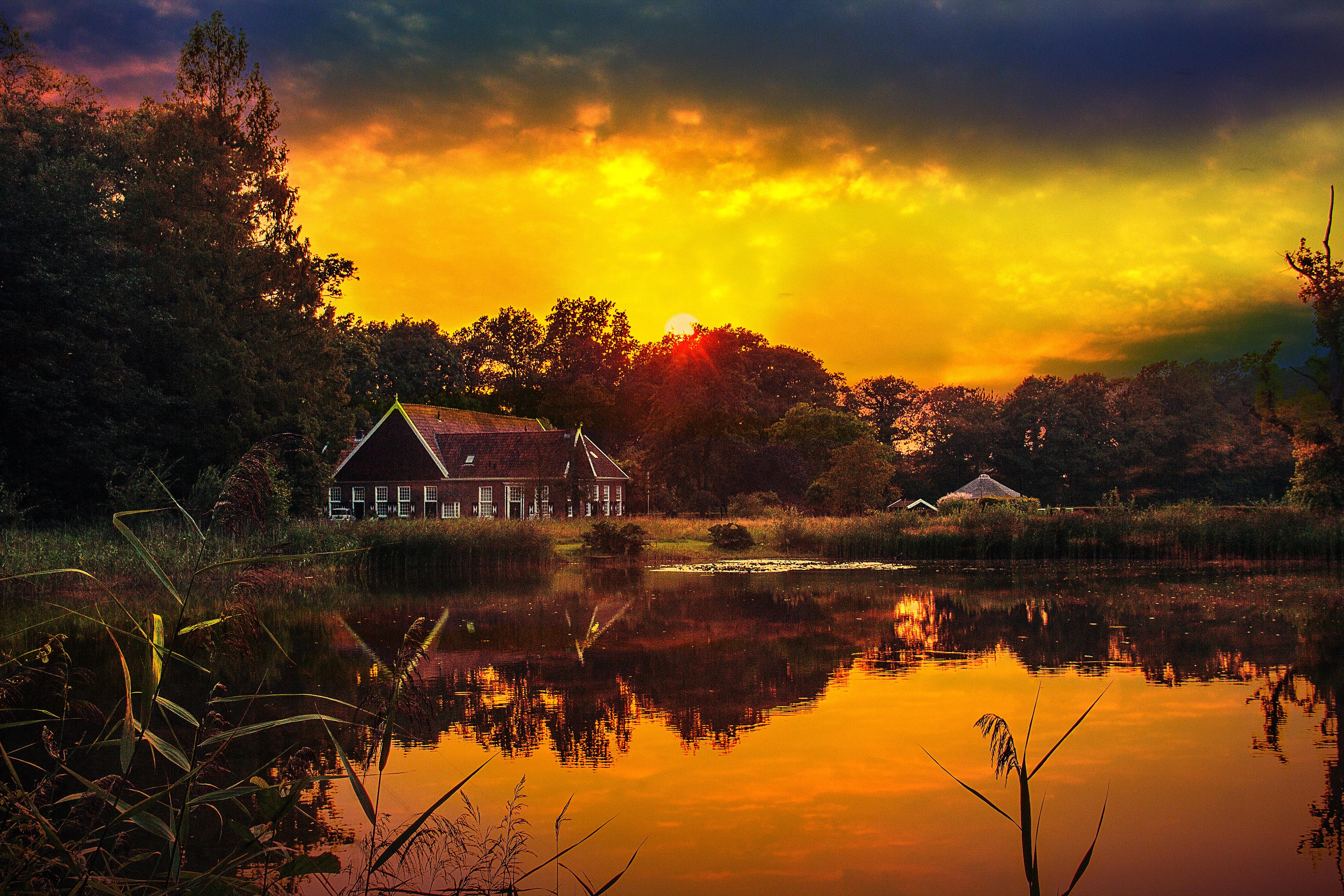 Gambar Pemandangan Pohon Alam Matahari Terbit Matahari