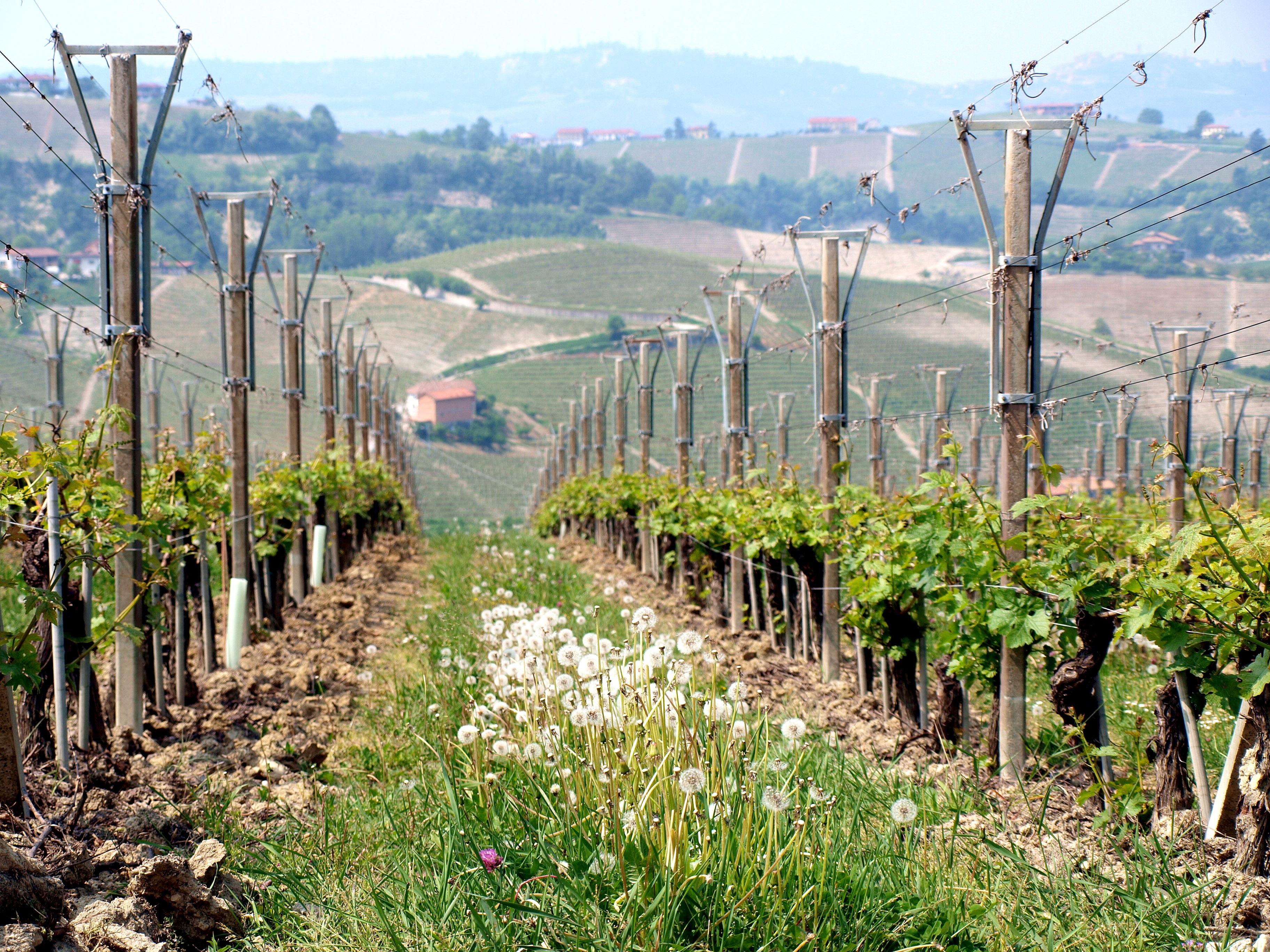 Gratis afbeeldingen landschap boom natuur wijnstok wijngaard veld helling herfst - Een helling aanpassen ...