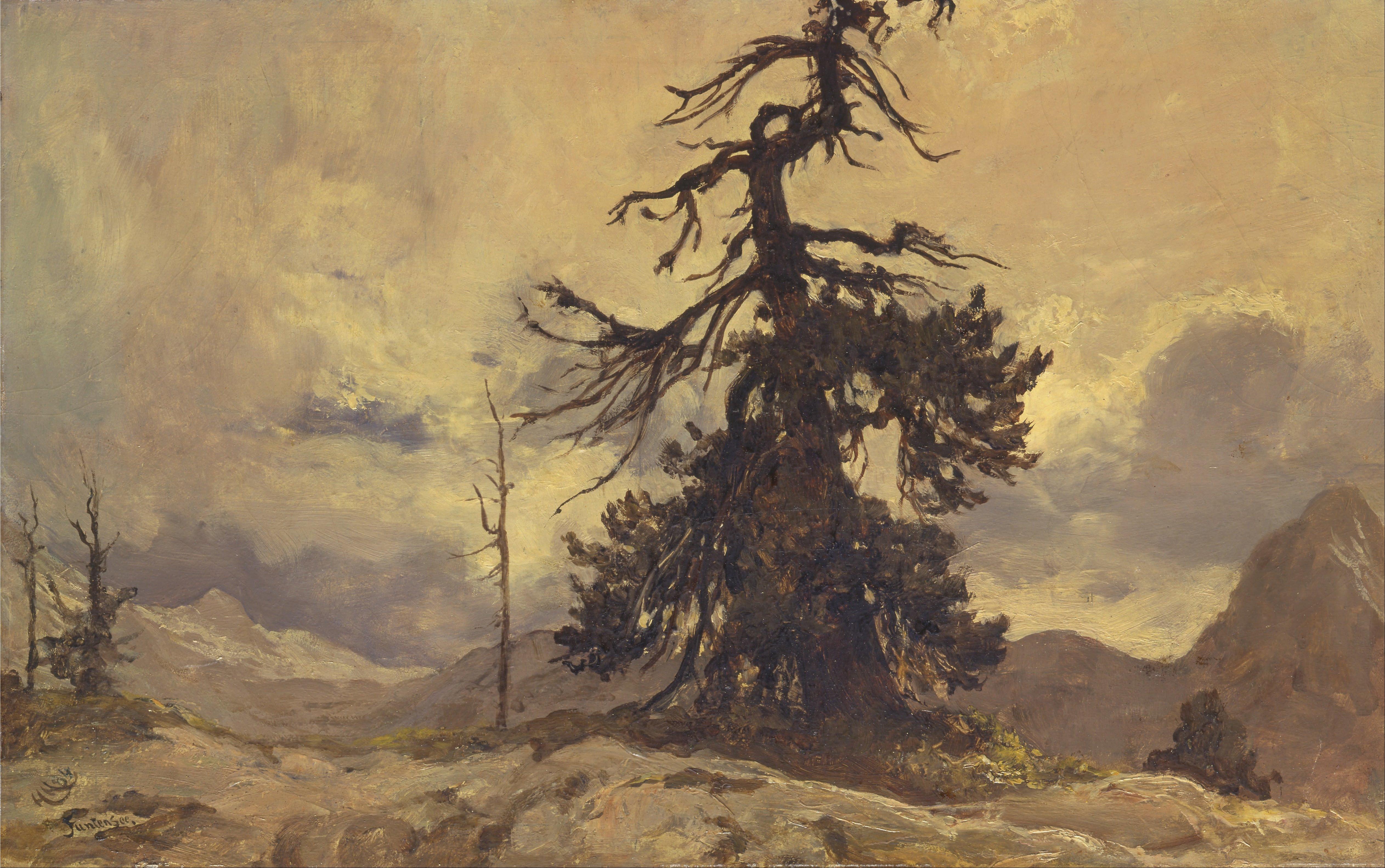 Gambar Pemandangan Pohon Alam Gurun Cabang Langit