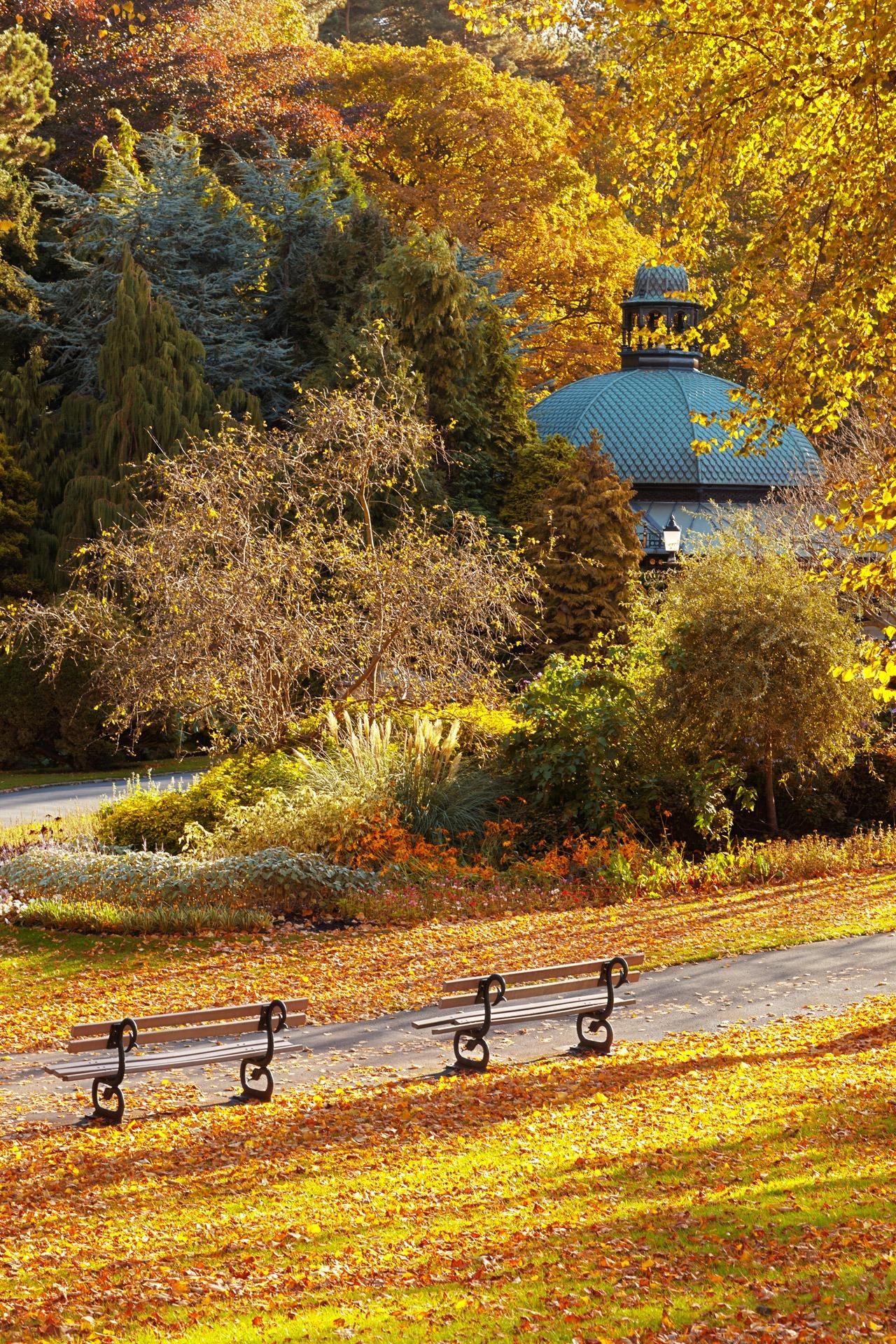 Kostenlose foto landschaft baum natur wildnis cafe bank wiese sonnenlicht morgen - Garten baum fallen ...