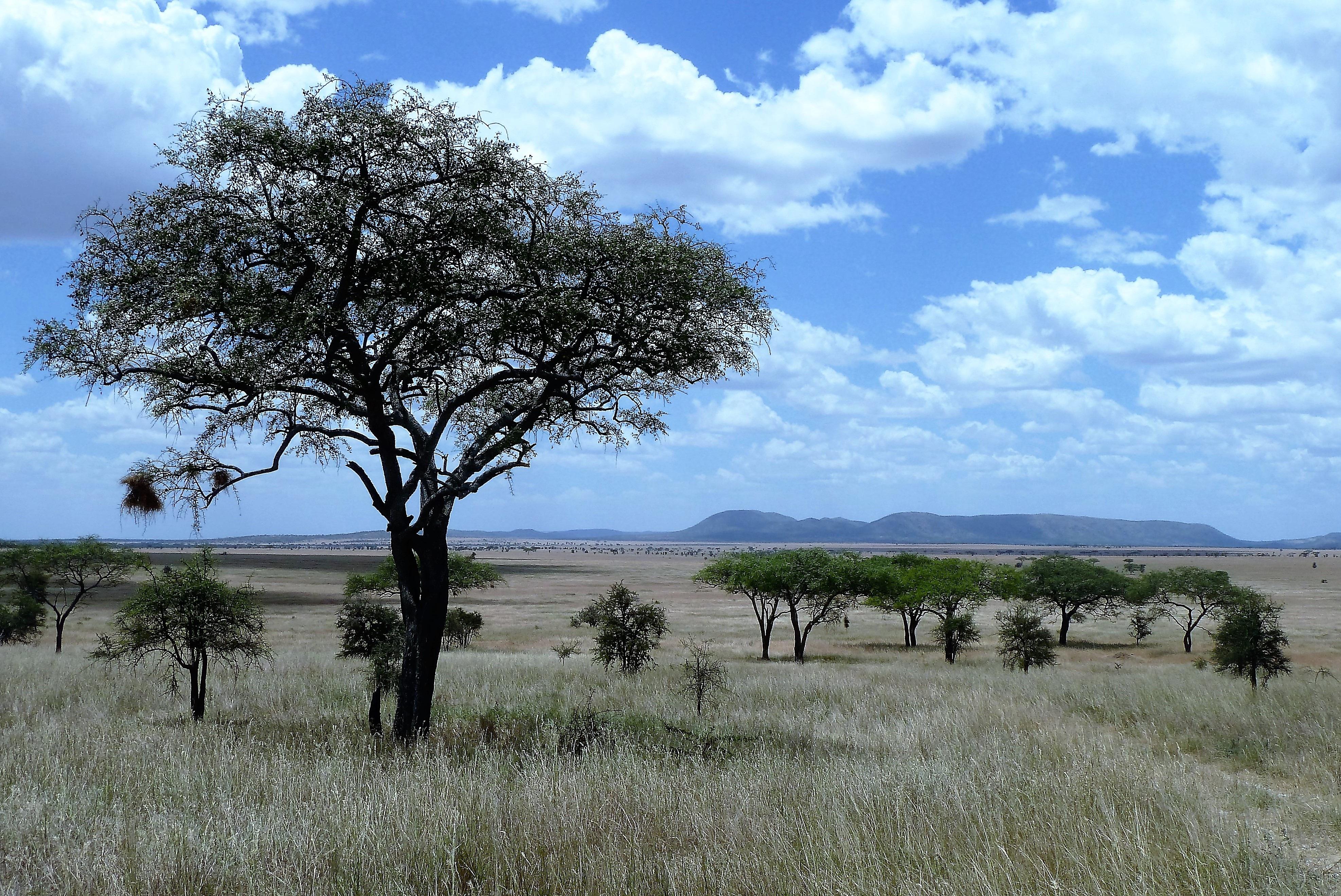 рыбы-капли фото природа и пейзажи африки дно формы