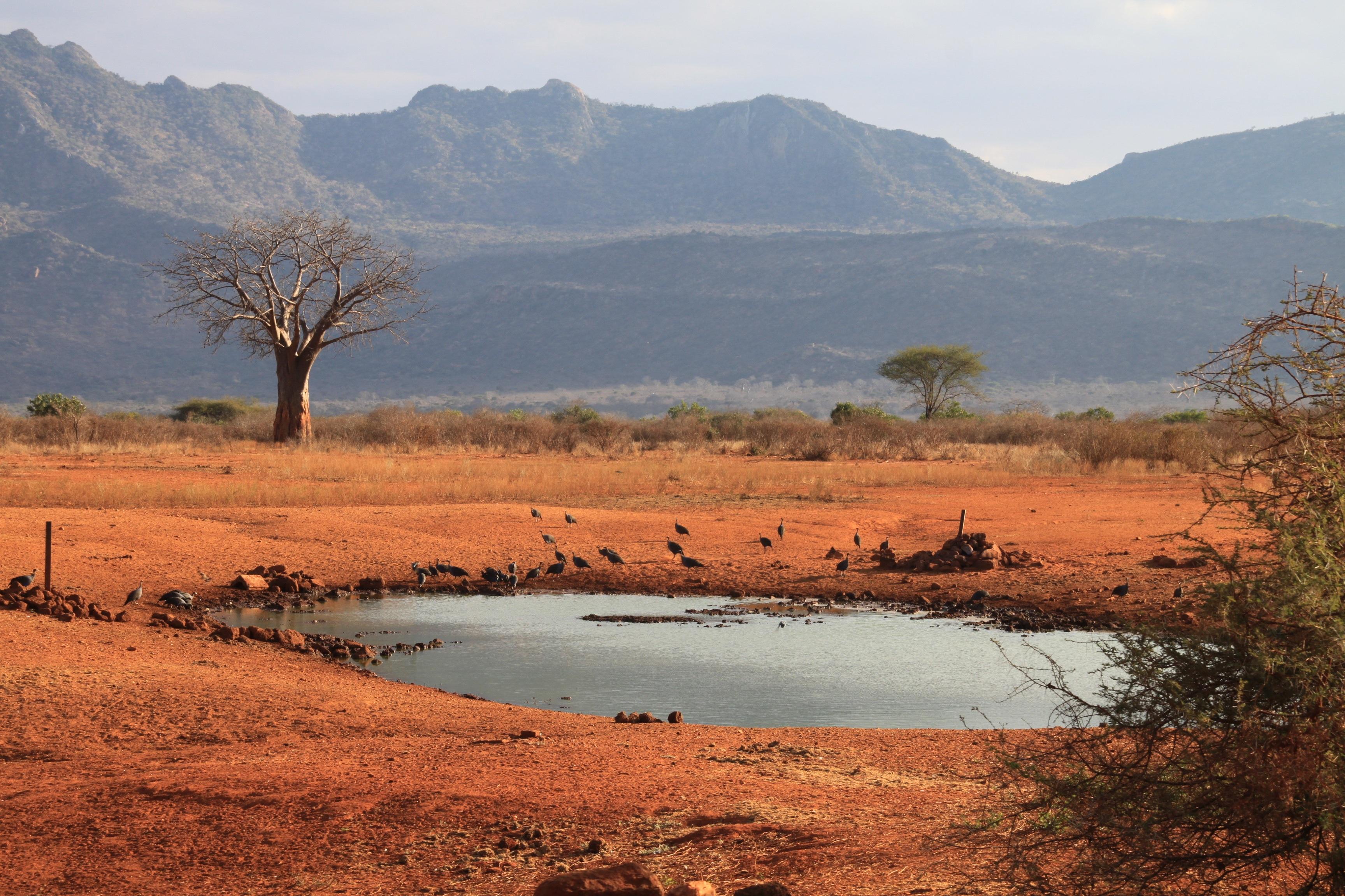 наборы деласерас африка фото чай