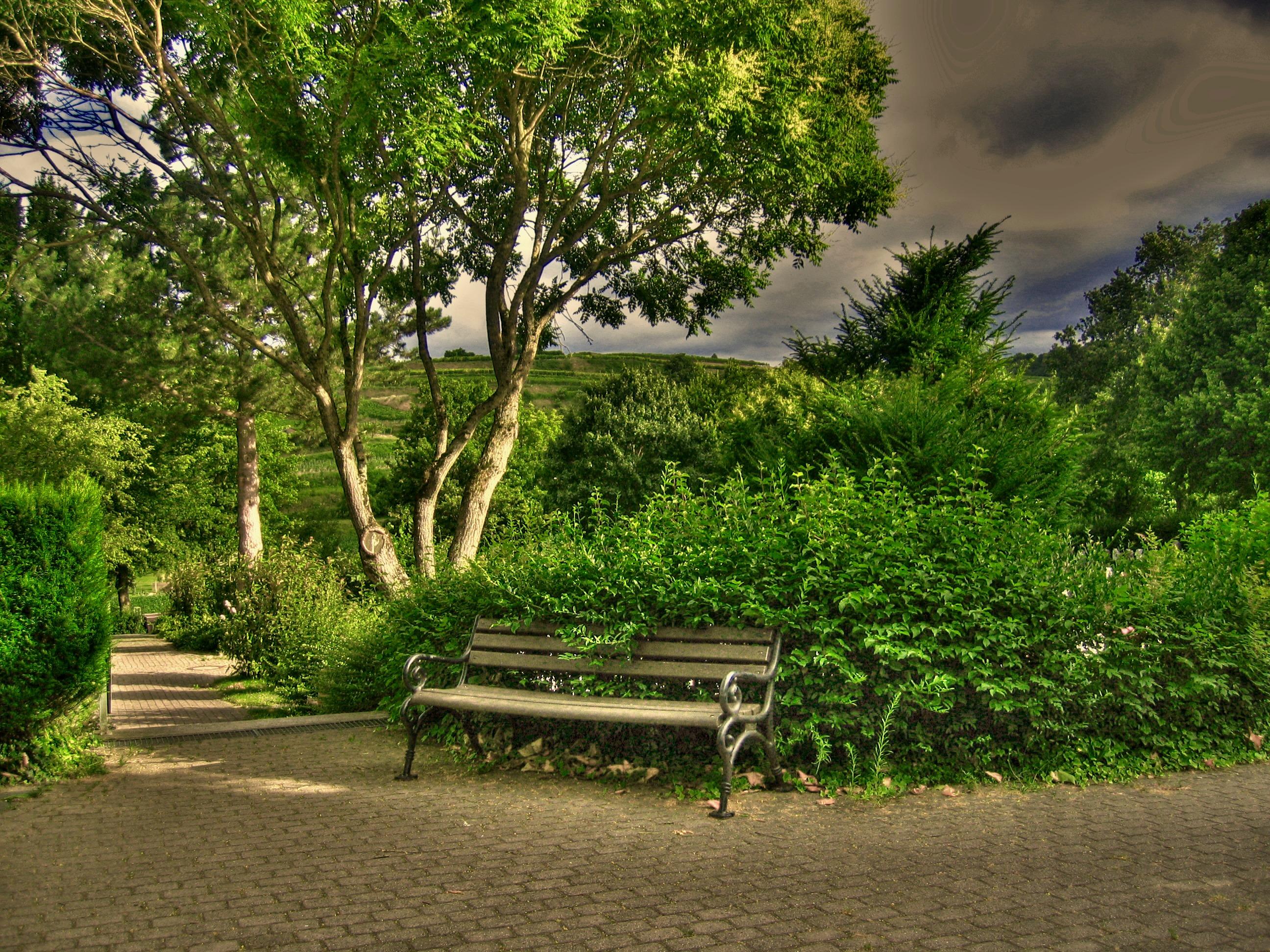 Gambar : pemandangan, pohon, menanam, daun, bunga, hijau ...