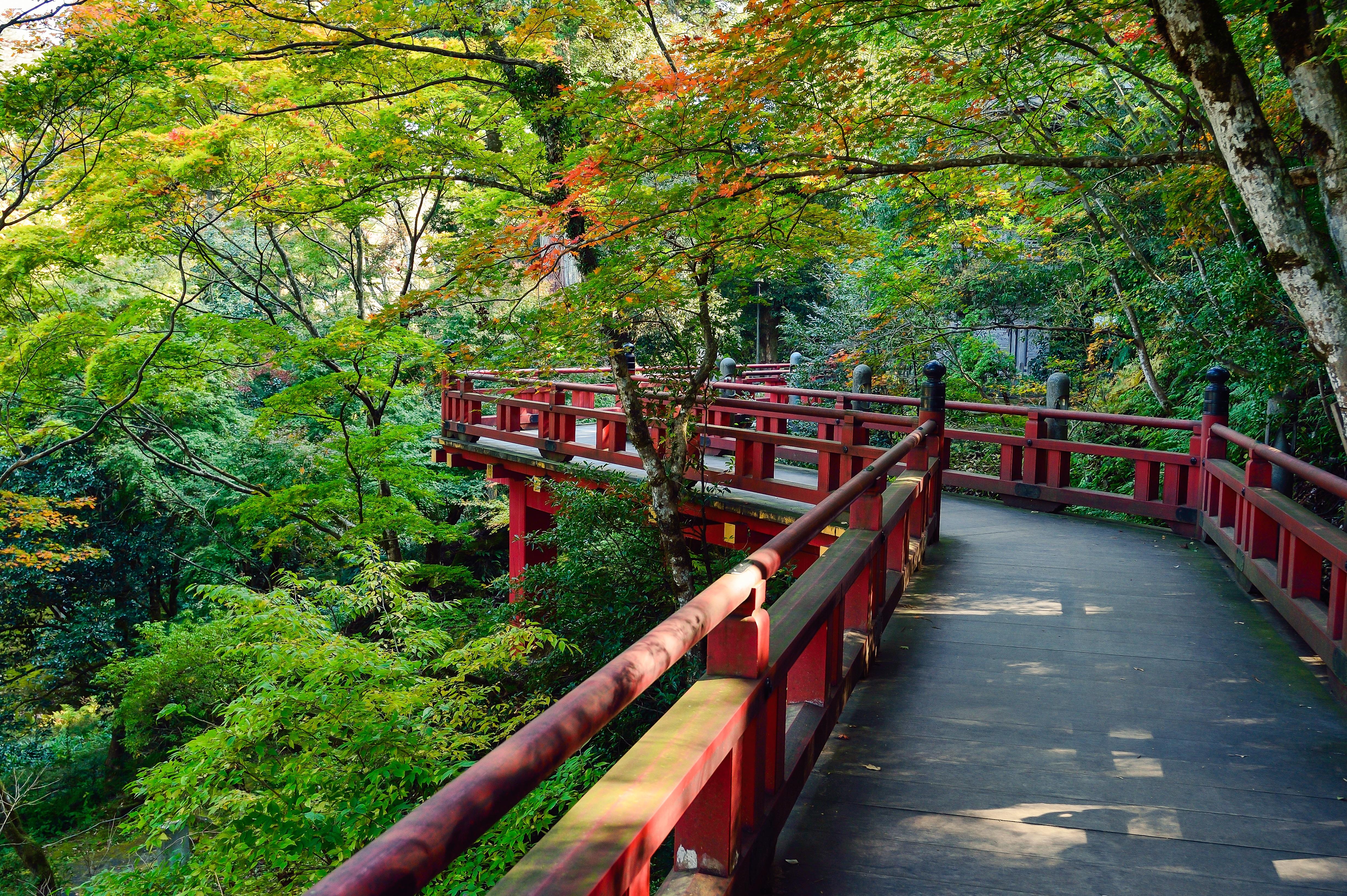 Gambar Pemandangan Pohon Menanam Kayu Jembatan Daun Bunga