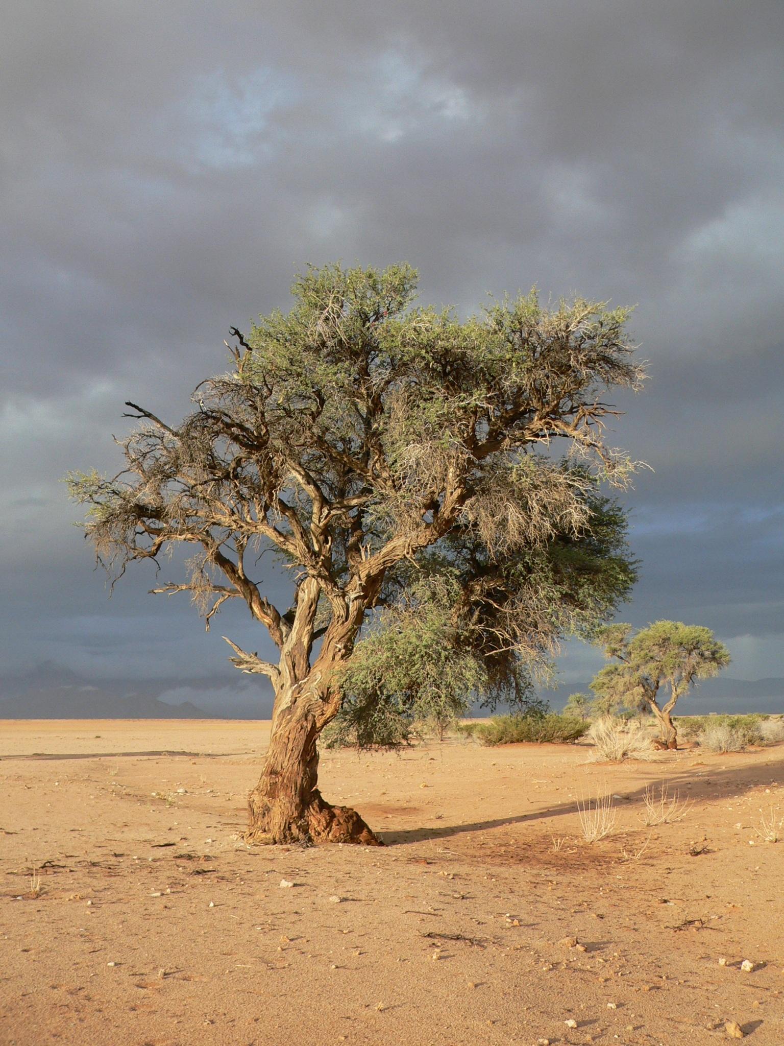 Деревья степи картинки
