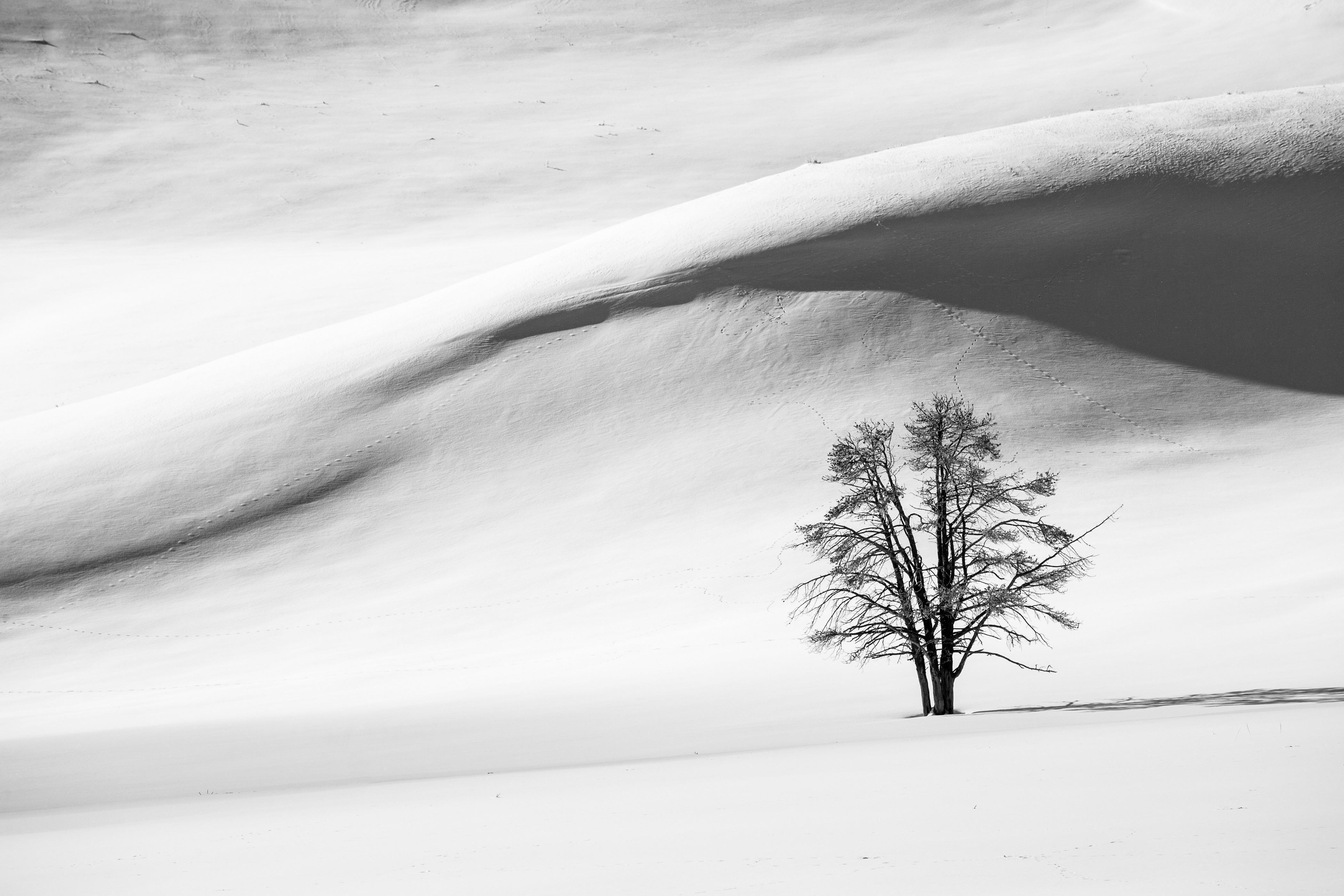 Gambar Pemandangan Pohon Pasir Musim Dingin Awan