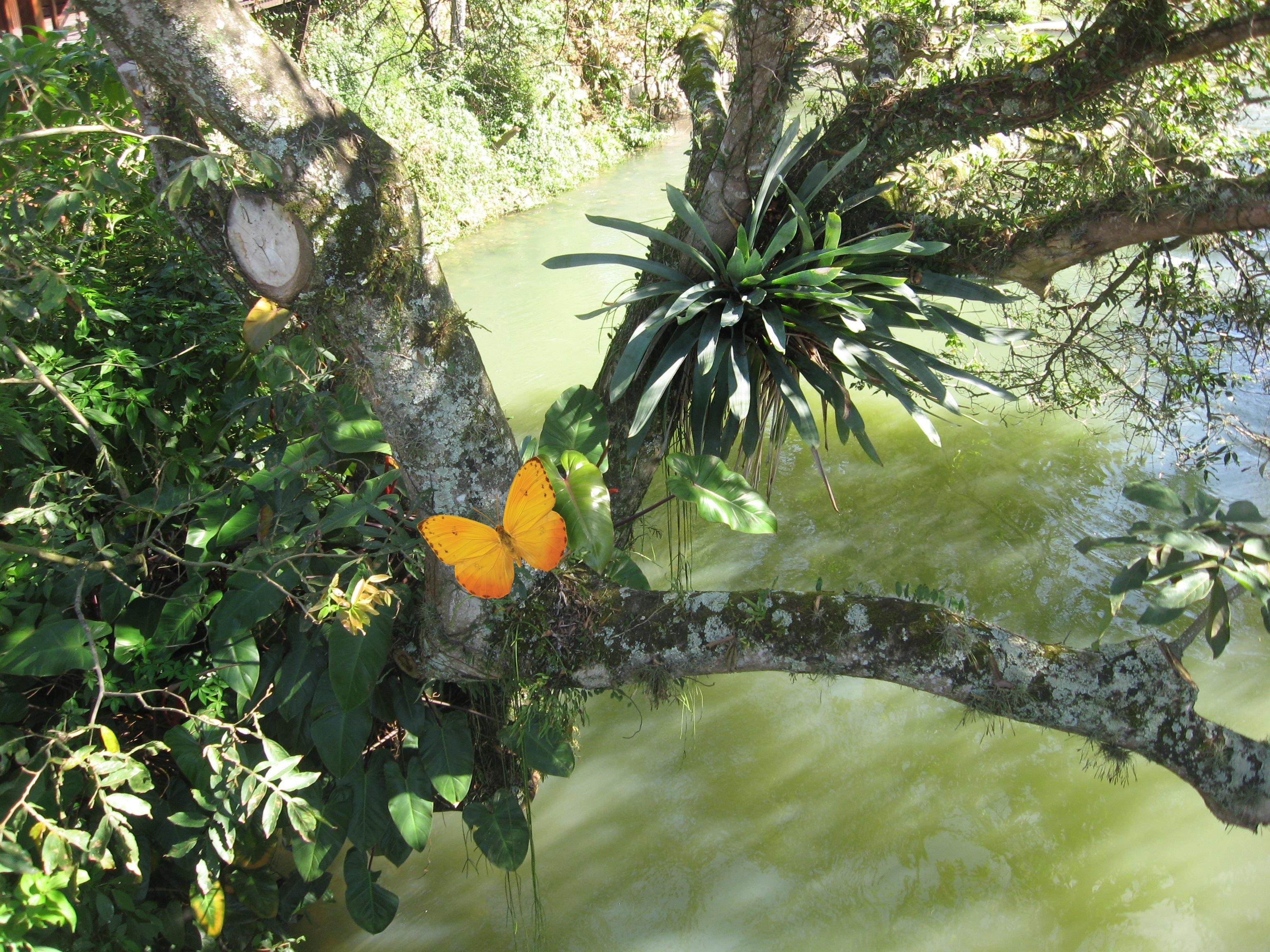 Extrêmement Images Gratuites : paysage, arbre, eau, branche, plante, feuille  HC88