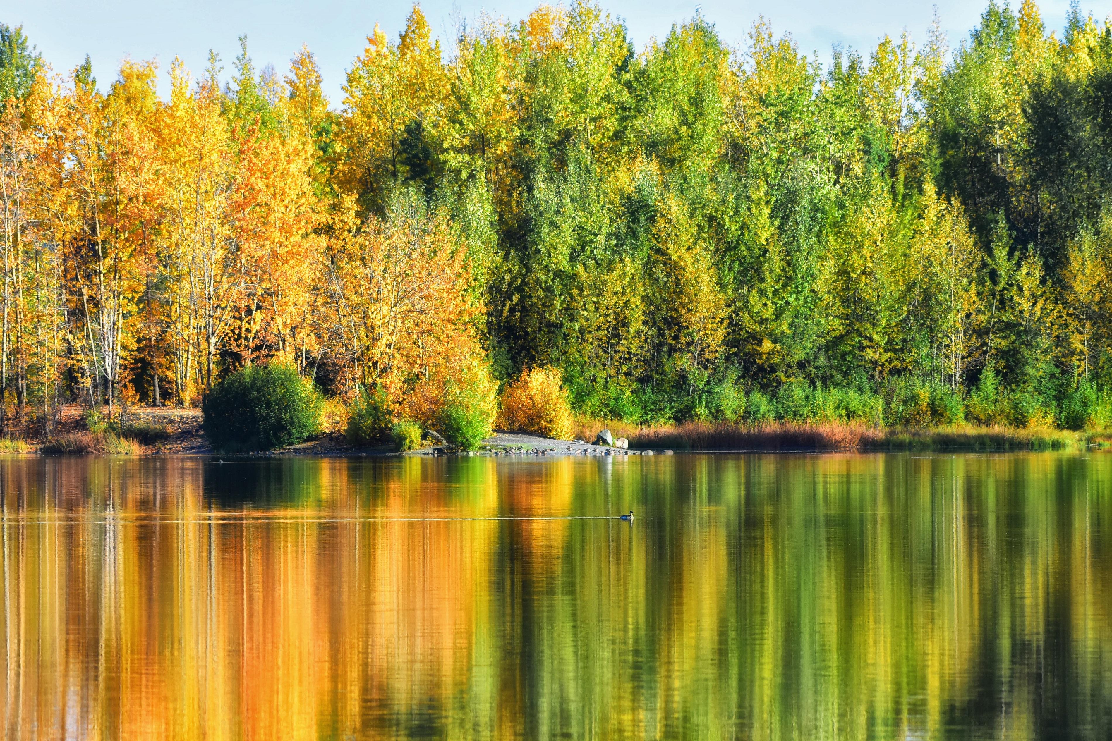 Free Images : landscape, tree, water, wilderness, meadow, leaf, lake ...