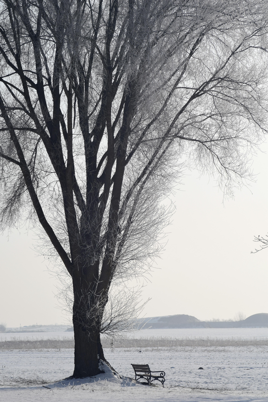 зимние деревья фото черно белые следования электричек