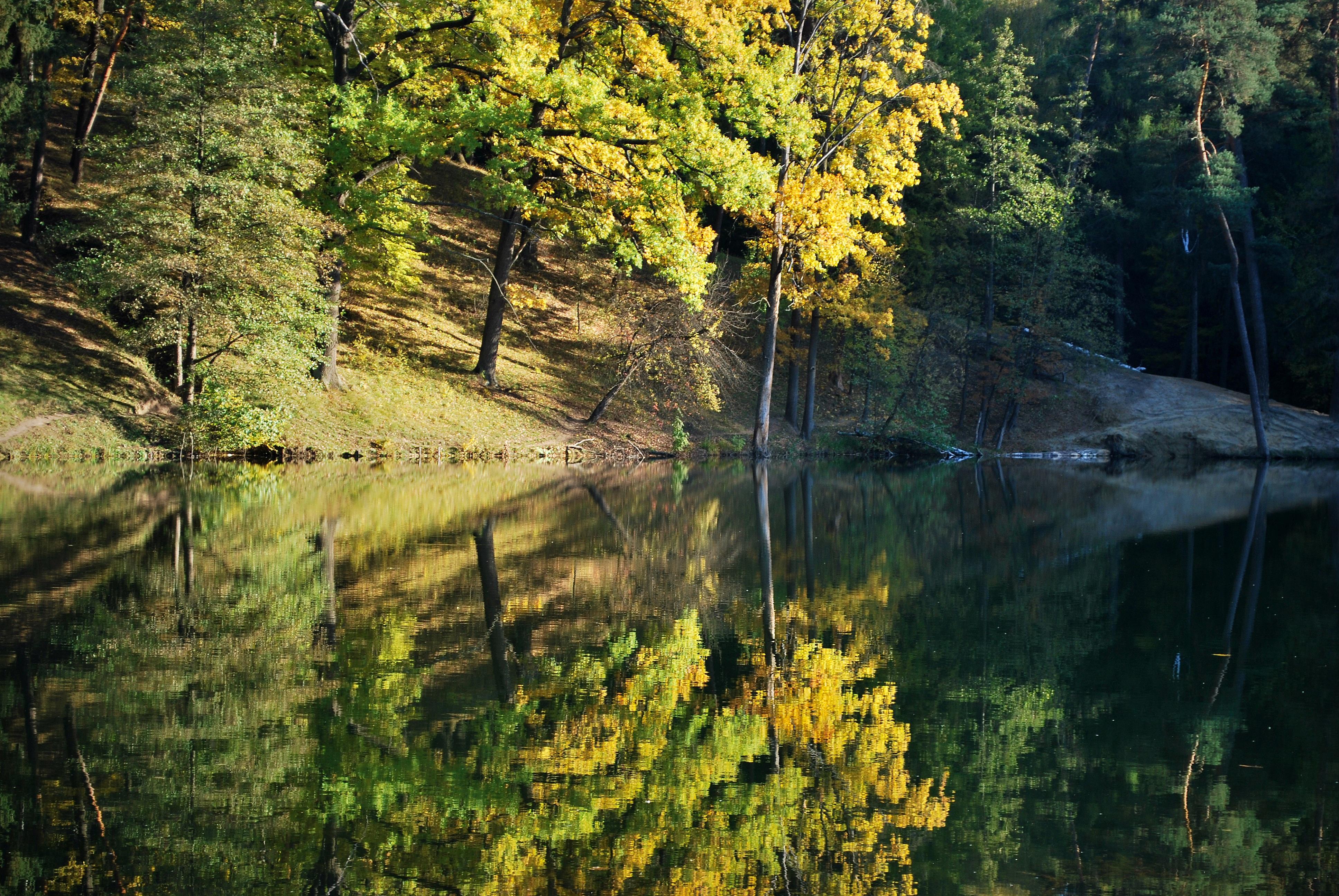 Gambar Pemandangan Pohon Air Rumput Sungai Kecil Rawa
