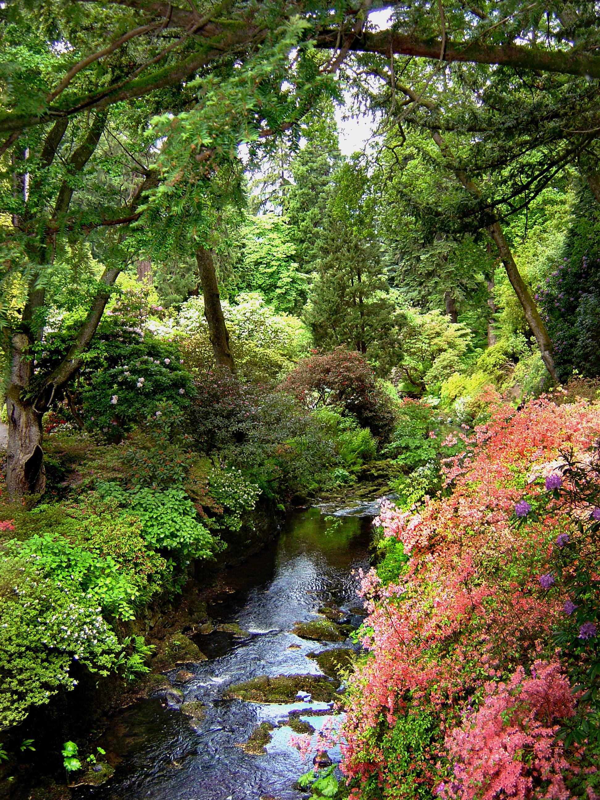 Fotos gratis paisaje rbol naturaleza c sped arroyo for Imagenes de jardines con estanques