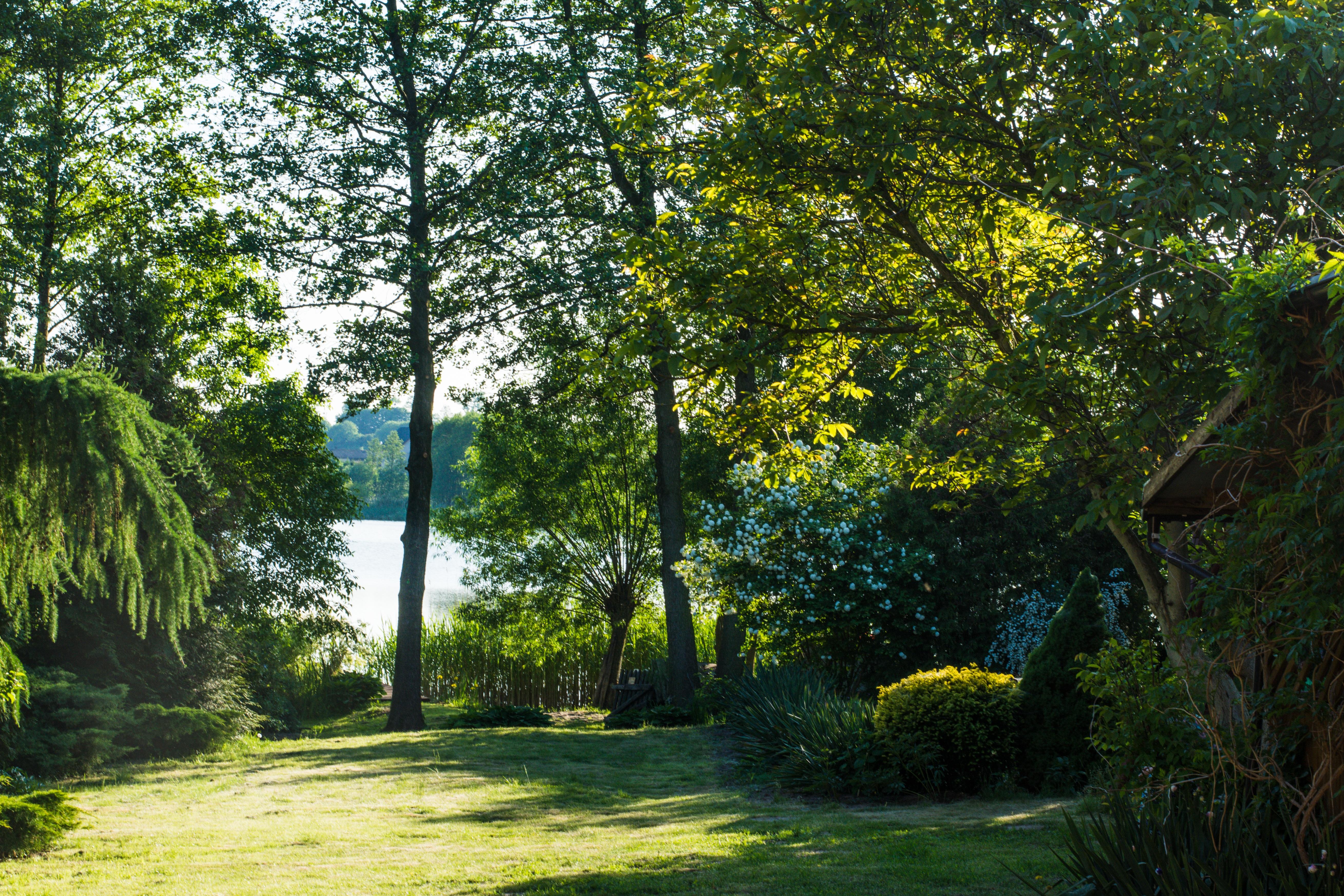 kostenlose foto landschaft baum wasser natur wald gras rasen wiese sonnenlicht blatt see aussicht sommer grn herbst park hinterhof - Hinterhof Landschaften Bilder