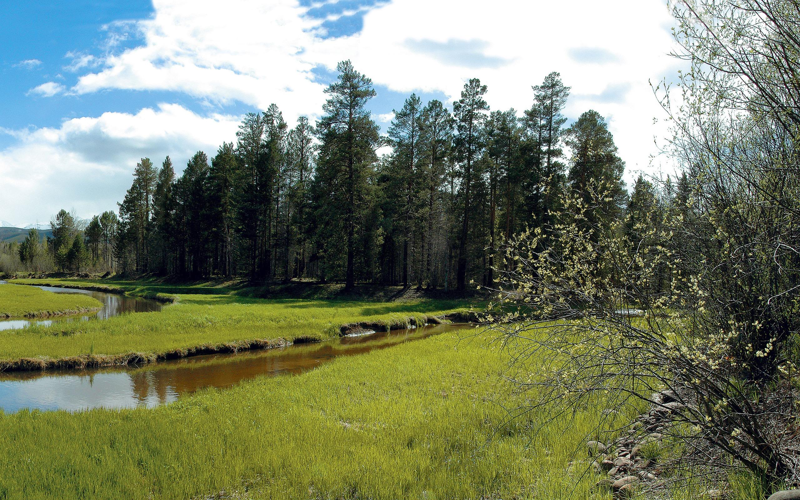 природа река трава деревья загрузить