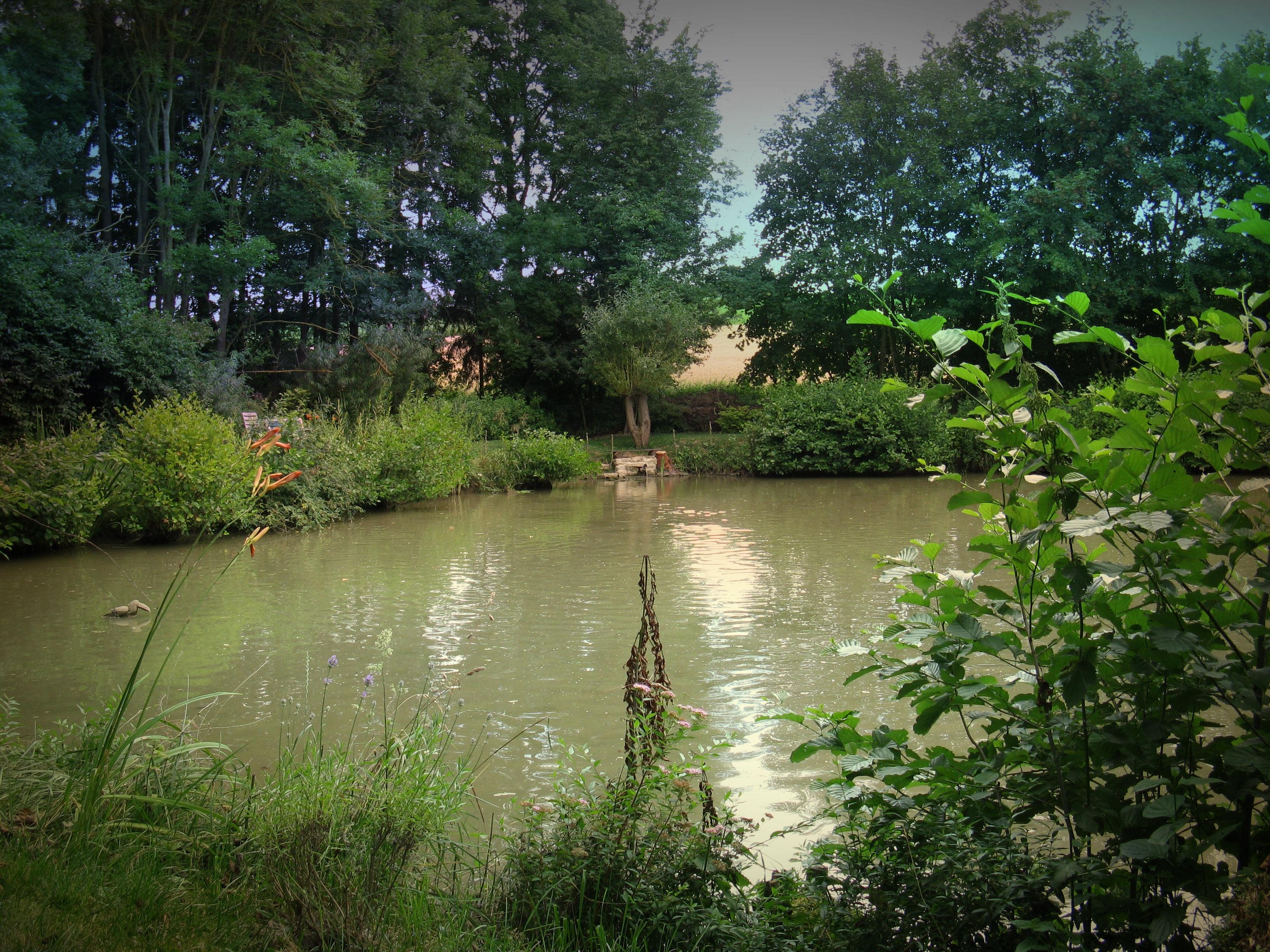 fotos gratis paisaje rbol naturaleza bosque lago. Black Bedroom Furniture Sets. Home Design Ideas