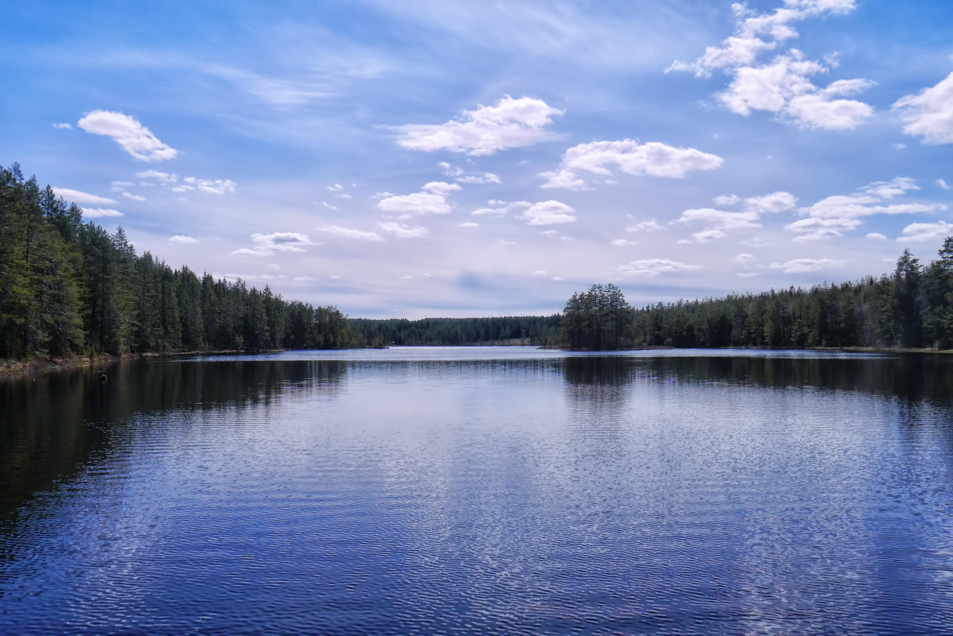 Exceptionnel Images Gratuites : paysage, arbre, eau, la nature, forêt, de plein  YX59