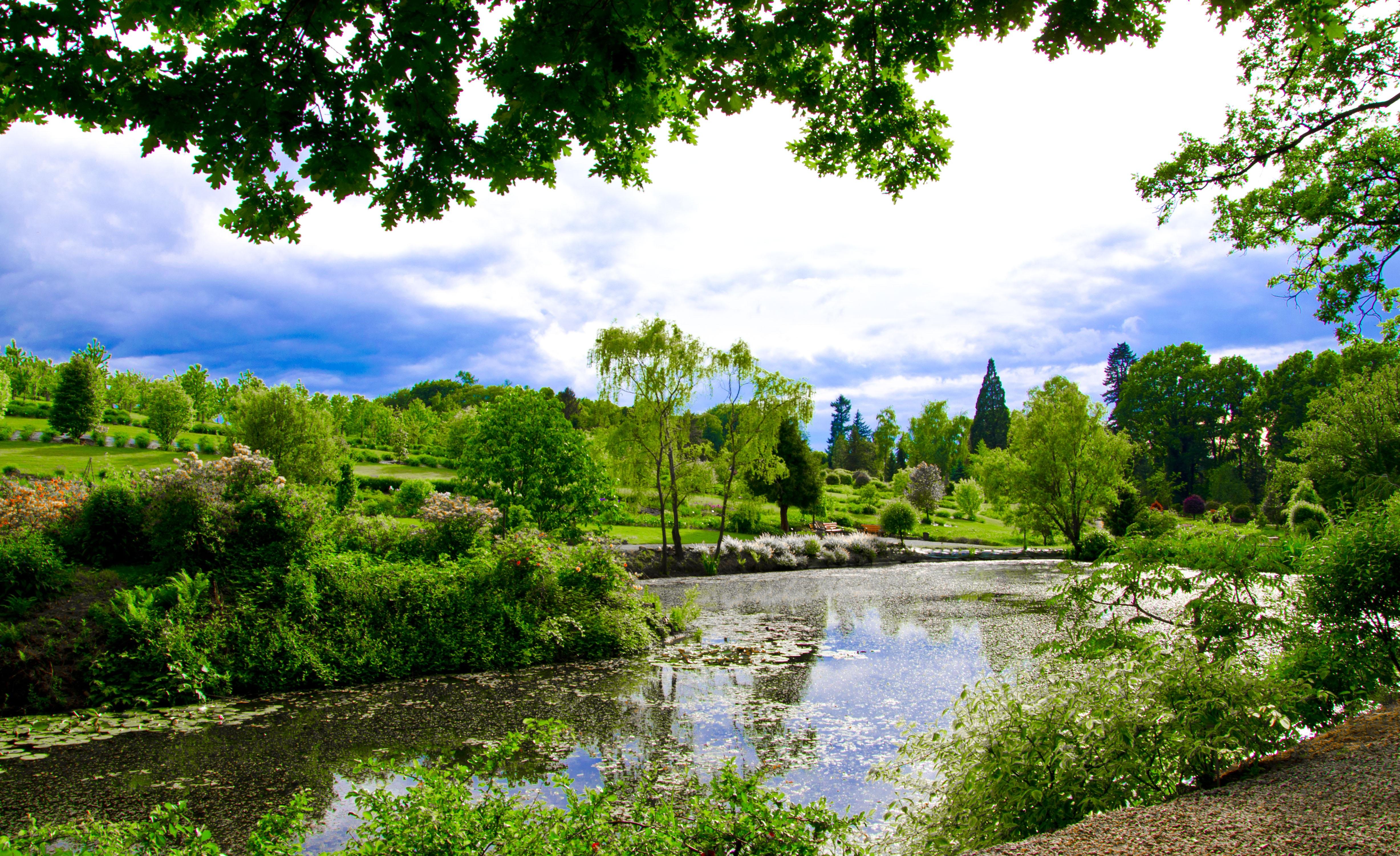 Fotos gratis paisaje rbol naturaleza bosque cielo - Plantas para estanques de jardin ...