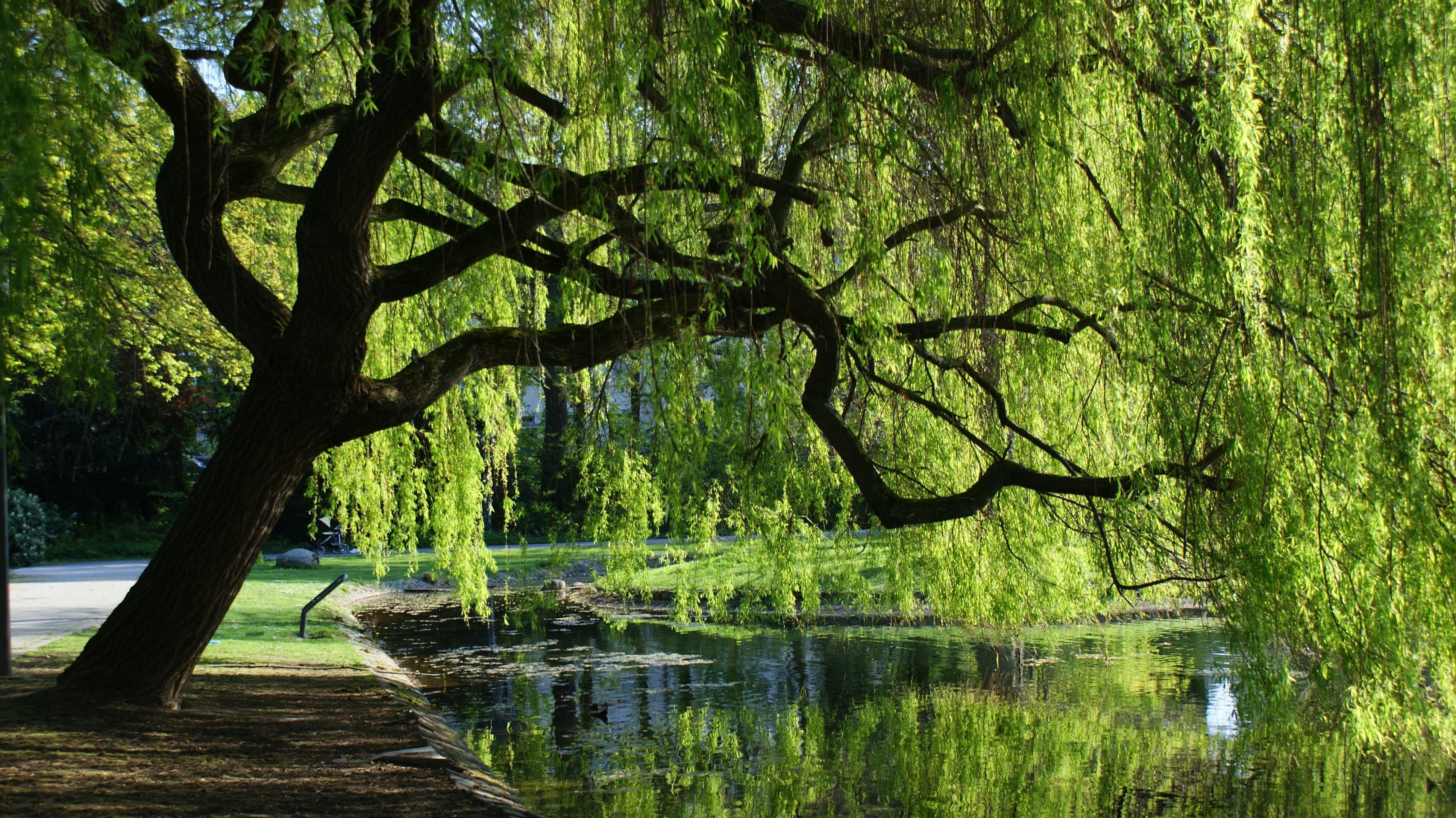 городе ива у озера картинки жизни артистки