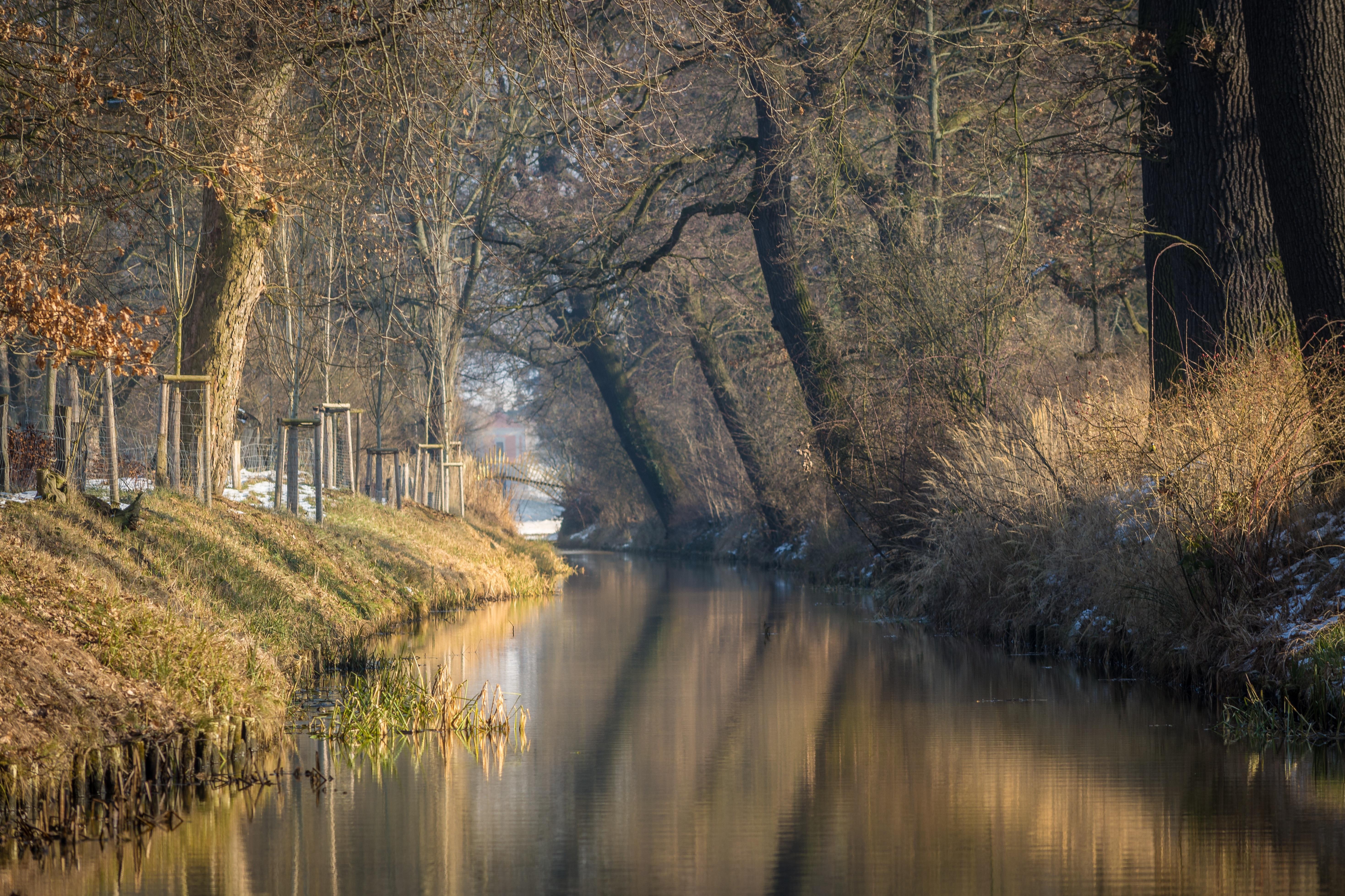 Habitat Düsseldorf free images landscape tree water nature forest sw