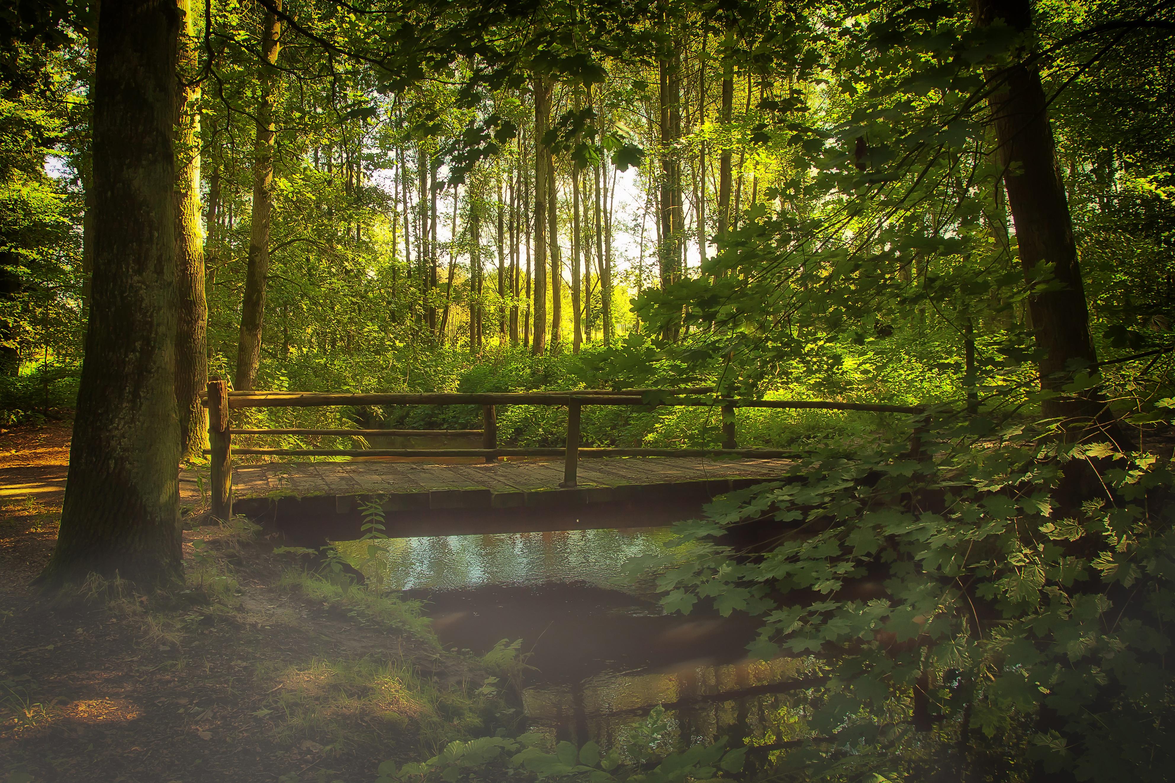 Gambar Pemandangan Pohon Alam Rawa Gurun Kabut Jembatan