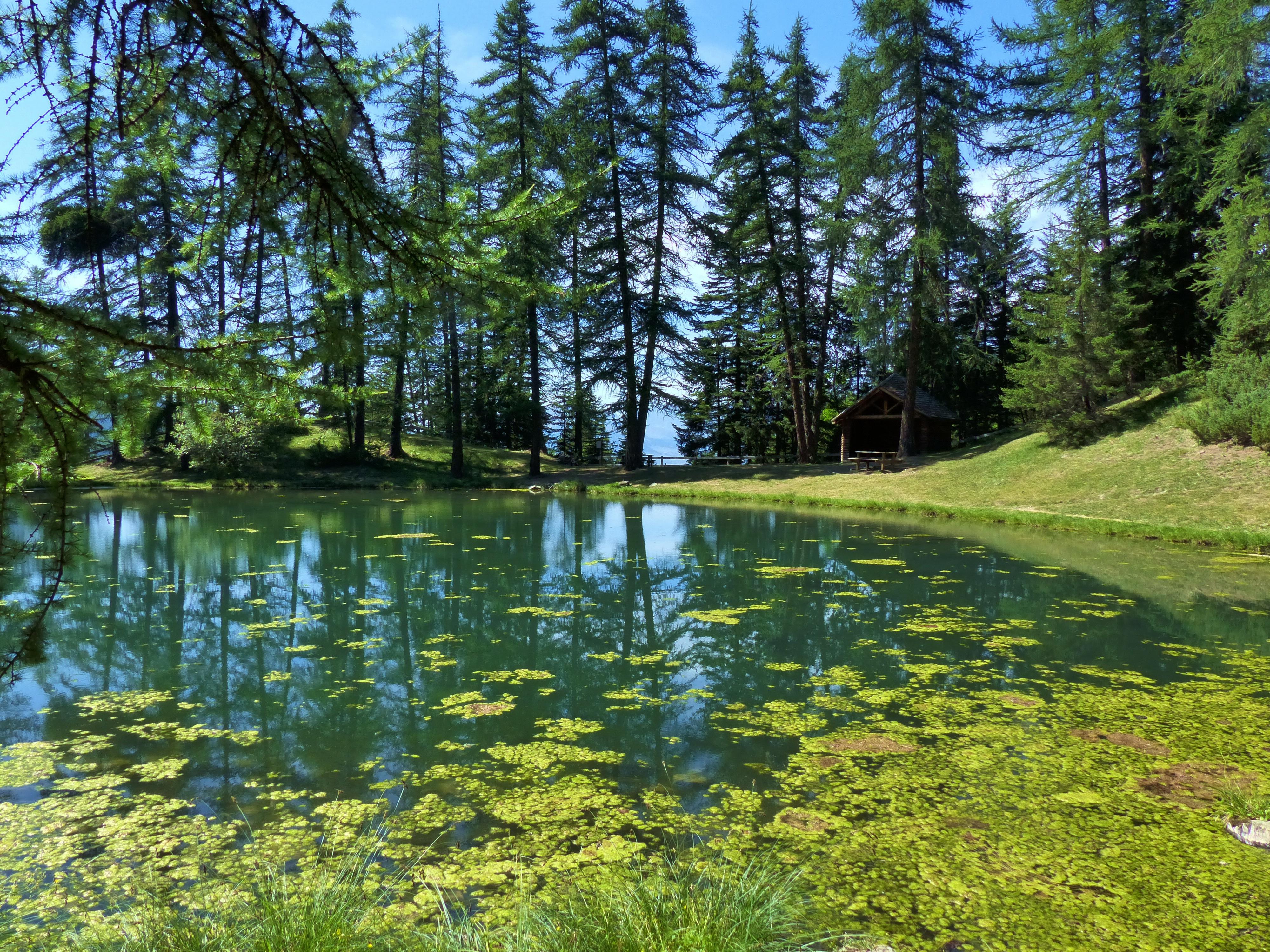 пишут, что красивые картинки с лесом и водой настоящие фото правильно