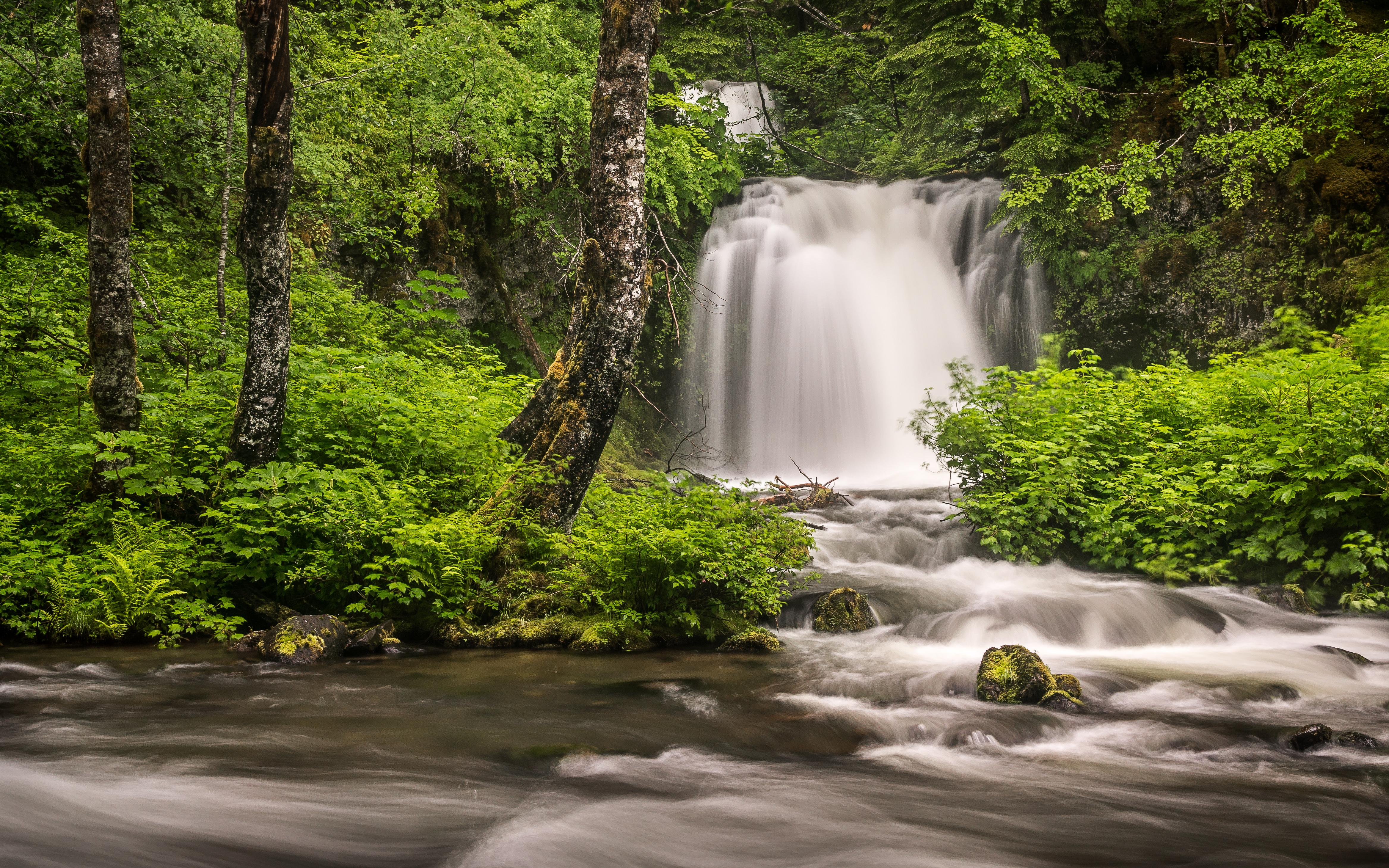 Gambar Pemandangan Pohon Alam Air Terjun Sungai Kecil Gurun