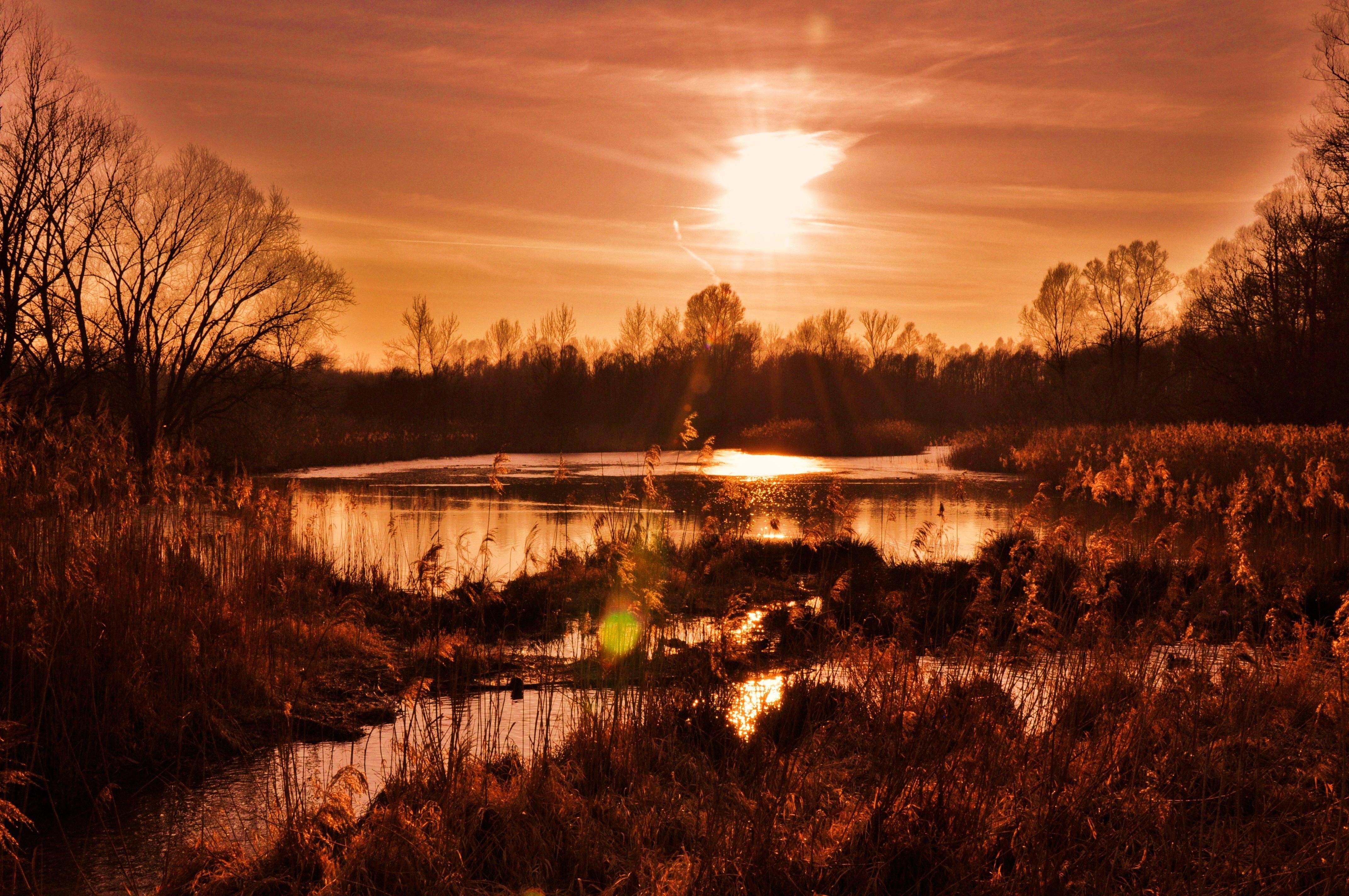 вечерние закаты в лесу фото