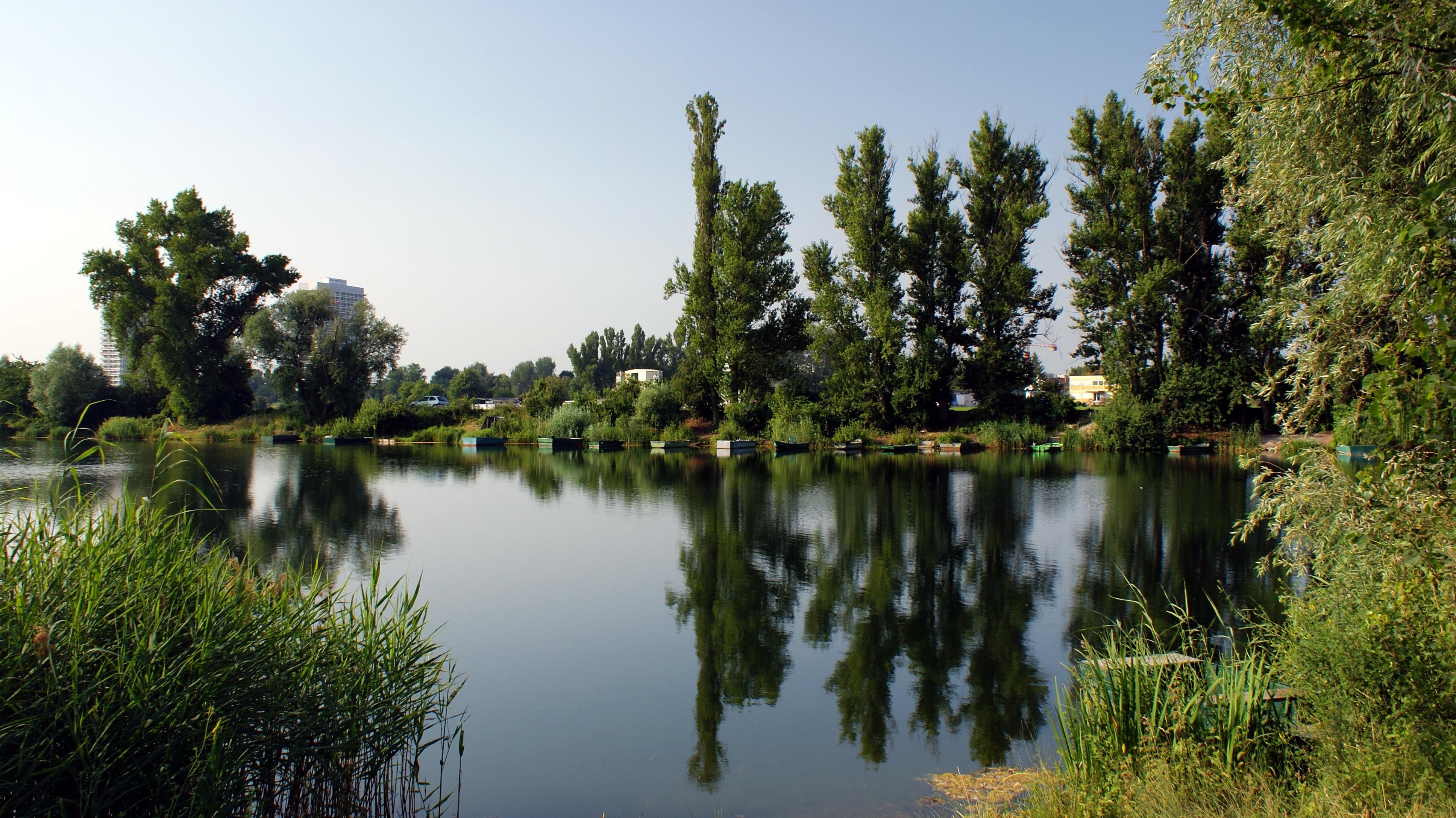 Habitat Düsseldorf free images tree nature forest wilderness lake river pond
