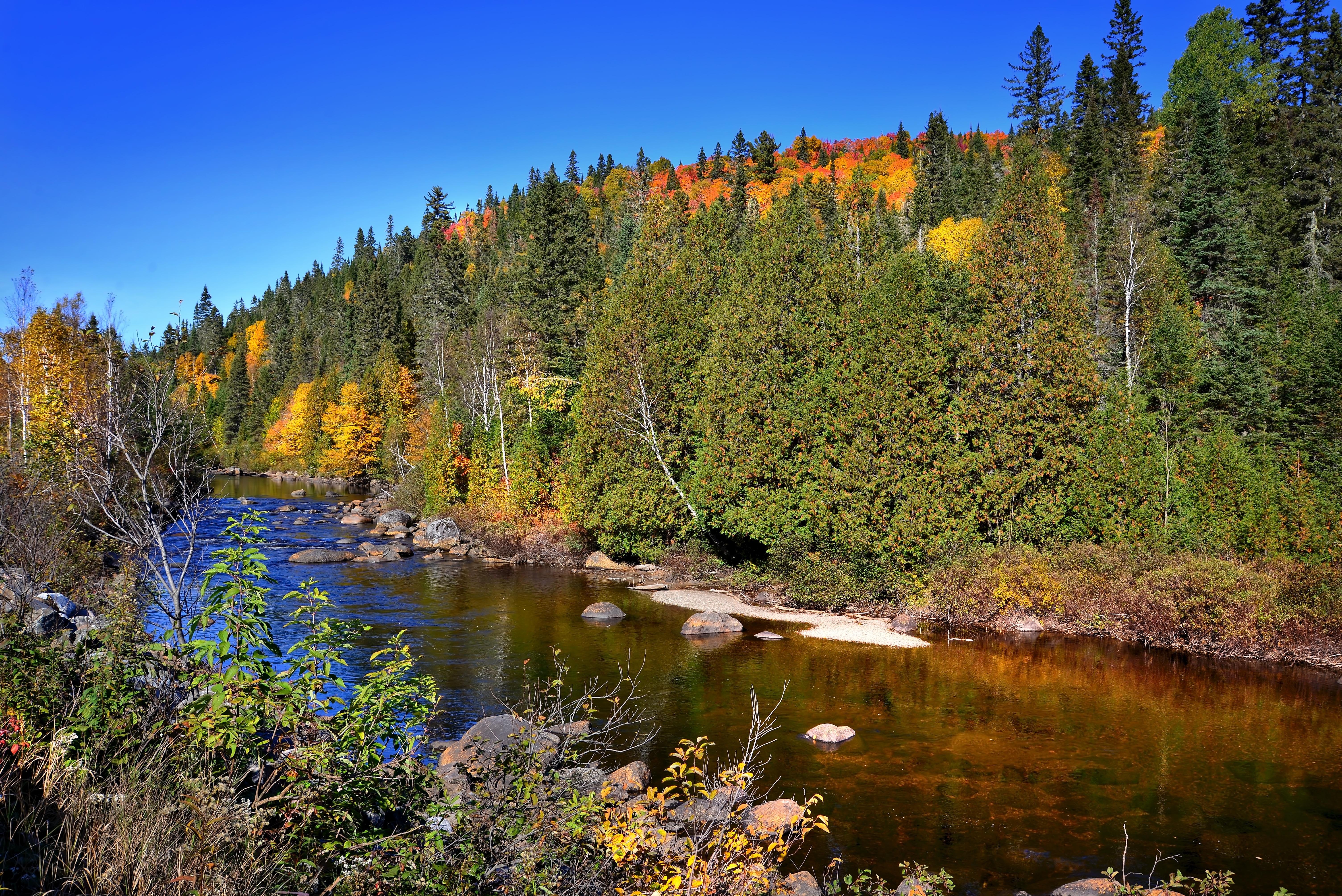 Kostenlose Foto Landschaft Baum Natur Wald Wildnis Berg