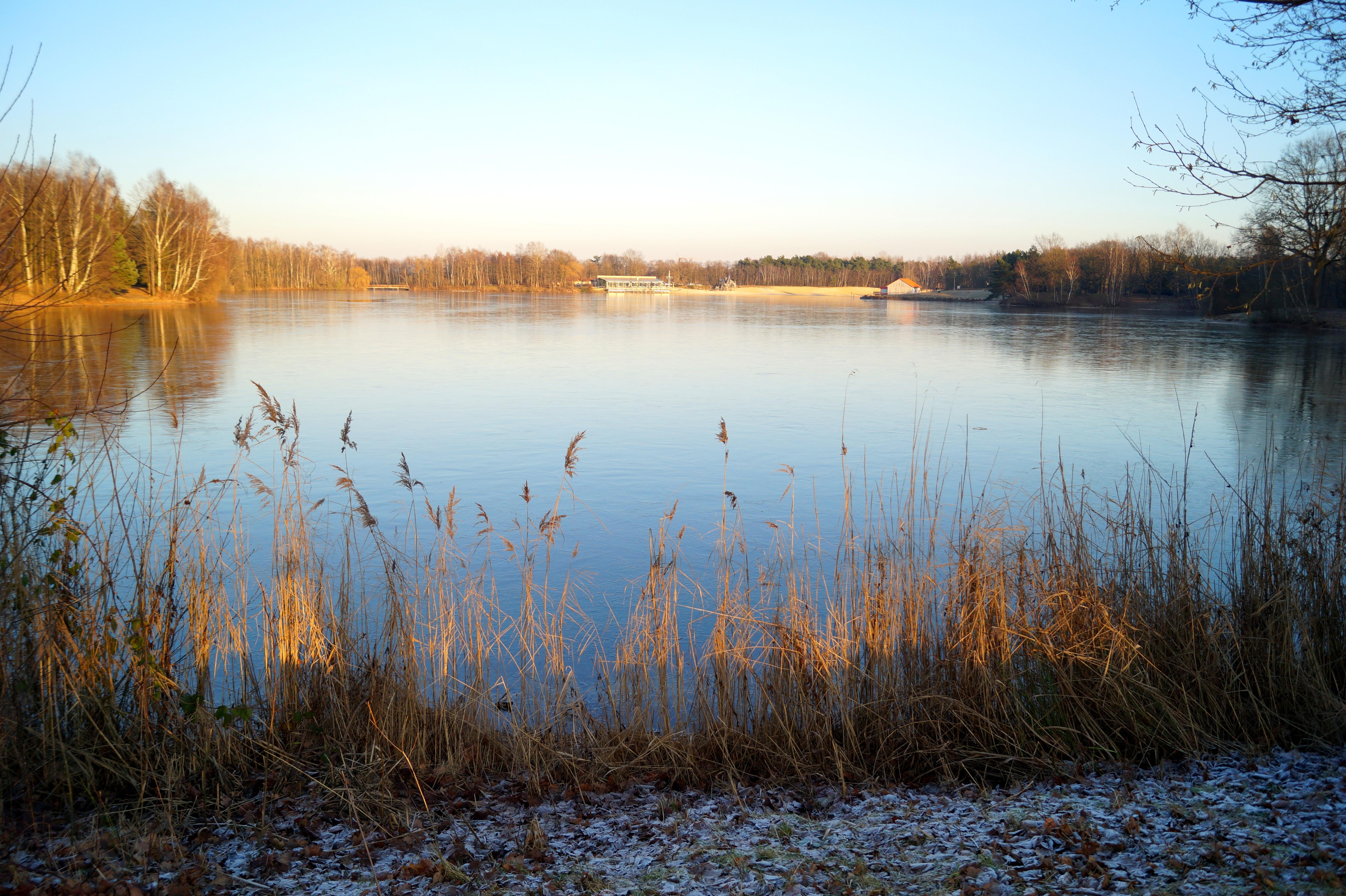 Free images landscape tree horizon creek marsh for Winter pond plants