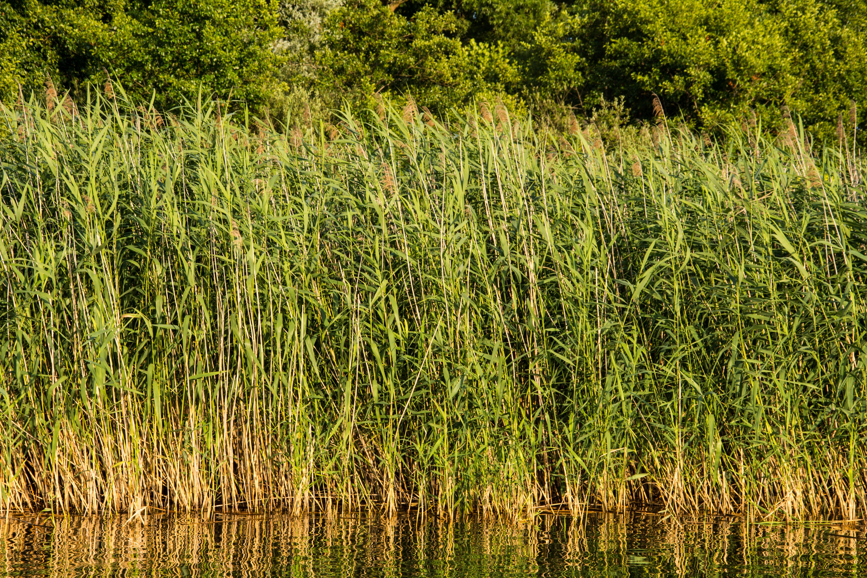 Gratis afbeeldingen : landschap boom water natuur moeras