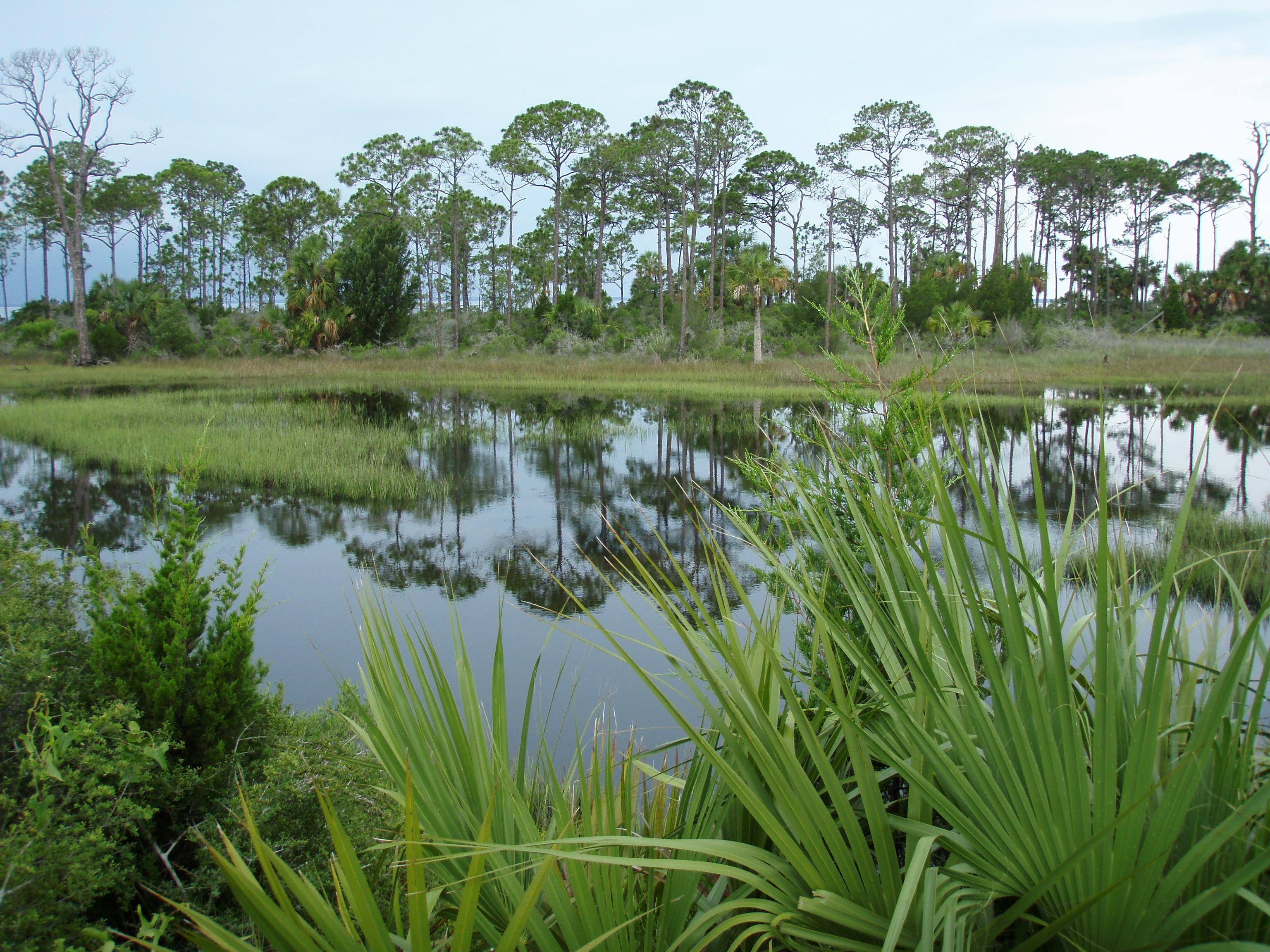 Fotos gratis paisaje rbol agua naturaleza c sped for Vegetacion ornamental