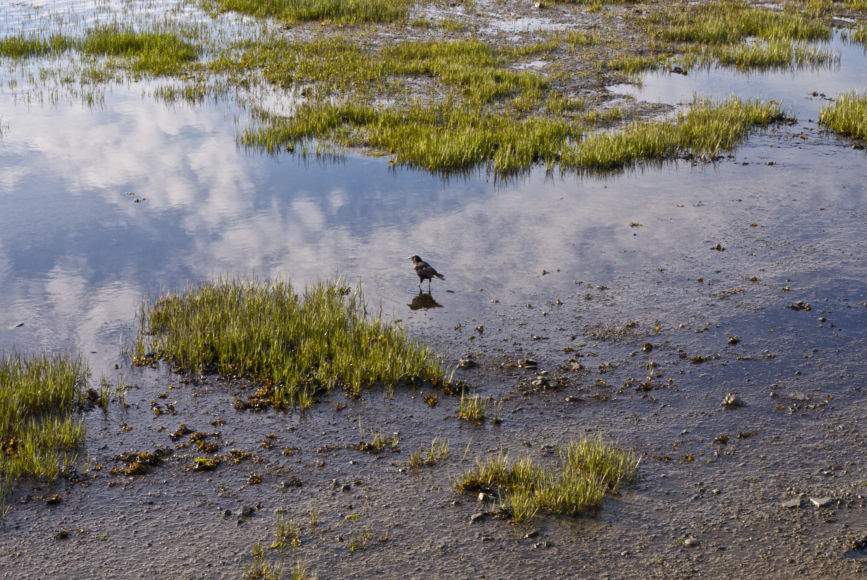 картинка болота в тундре