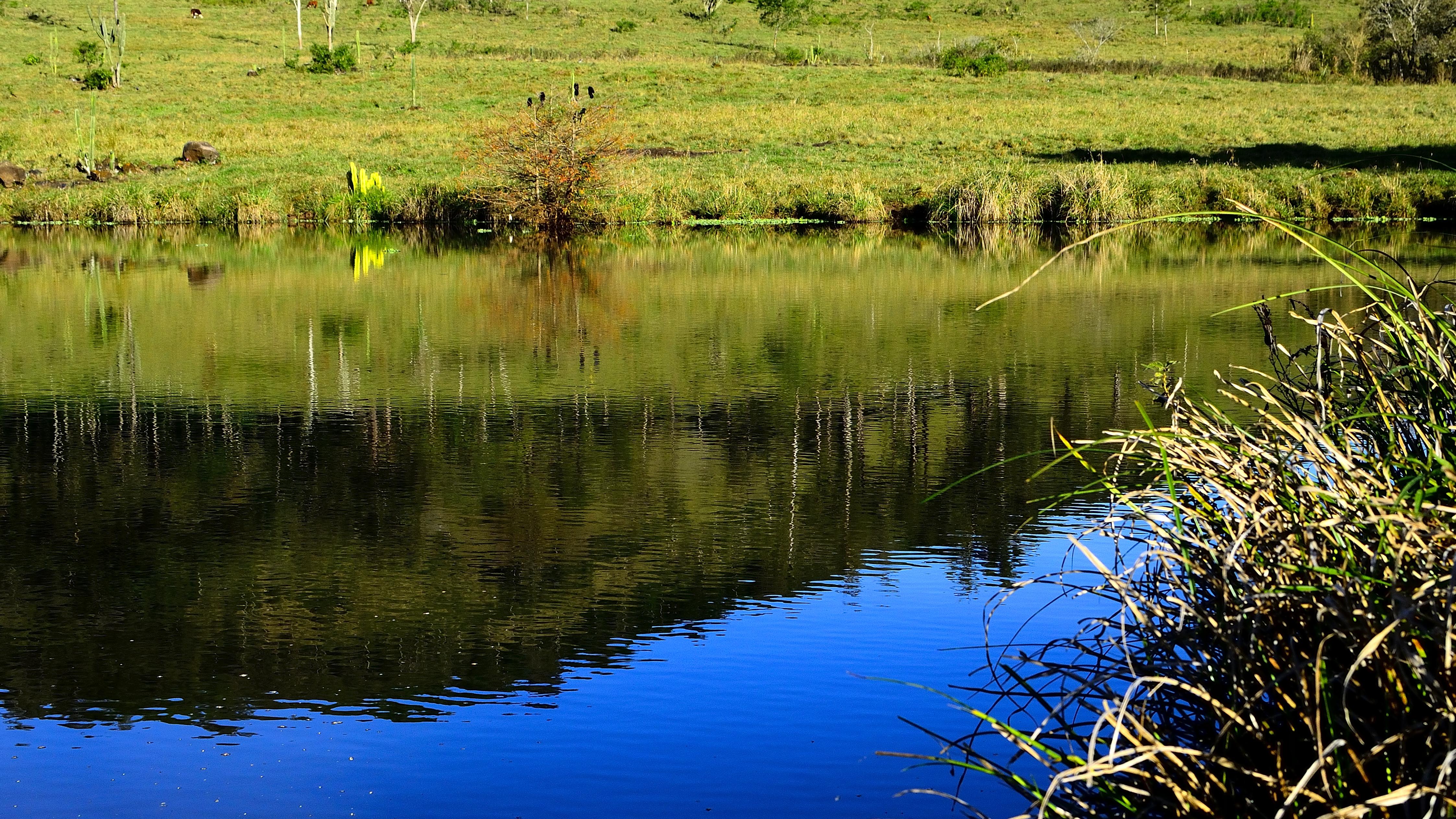 Gambar Pemandangan Pohon Air Alam Rawa Gurun Menanam Padang