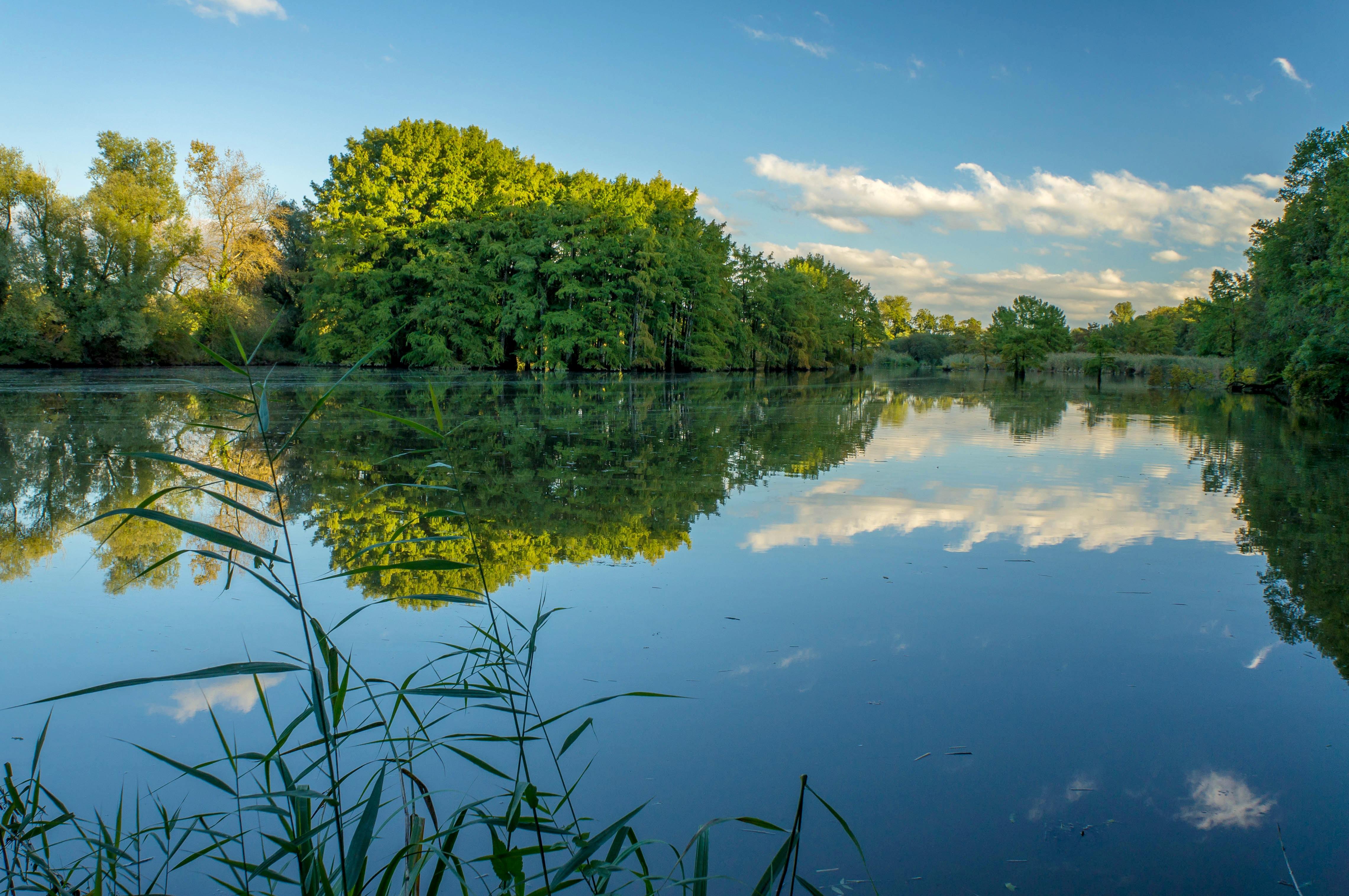 Пруд озеро картинки