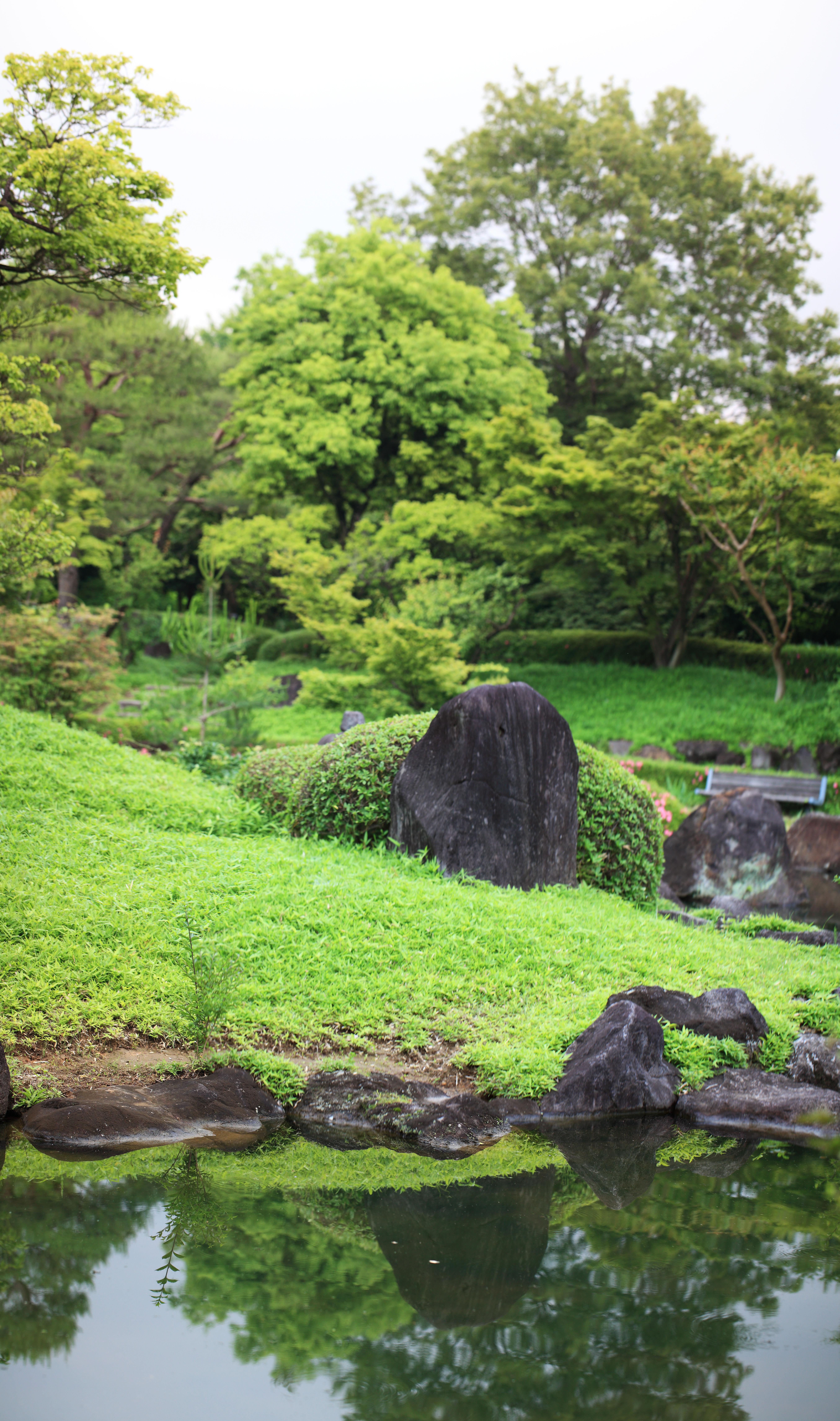 Images gratuites paysage arbre la nature herbe for Plante herbe haute